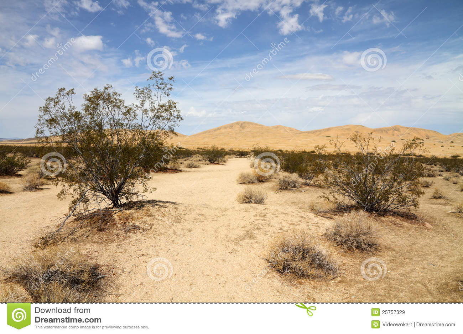 Ökenliggande (Mojaveöknen)