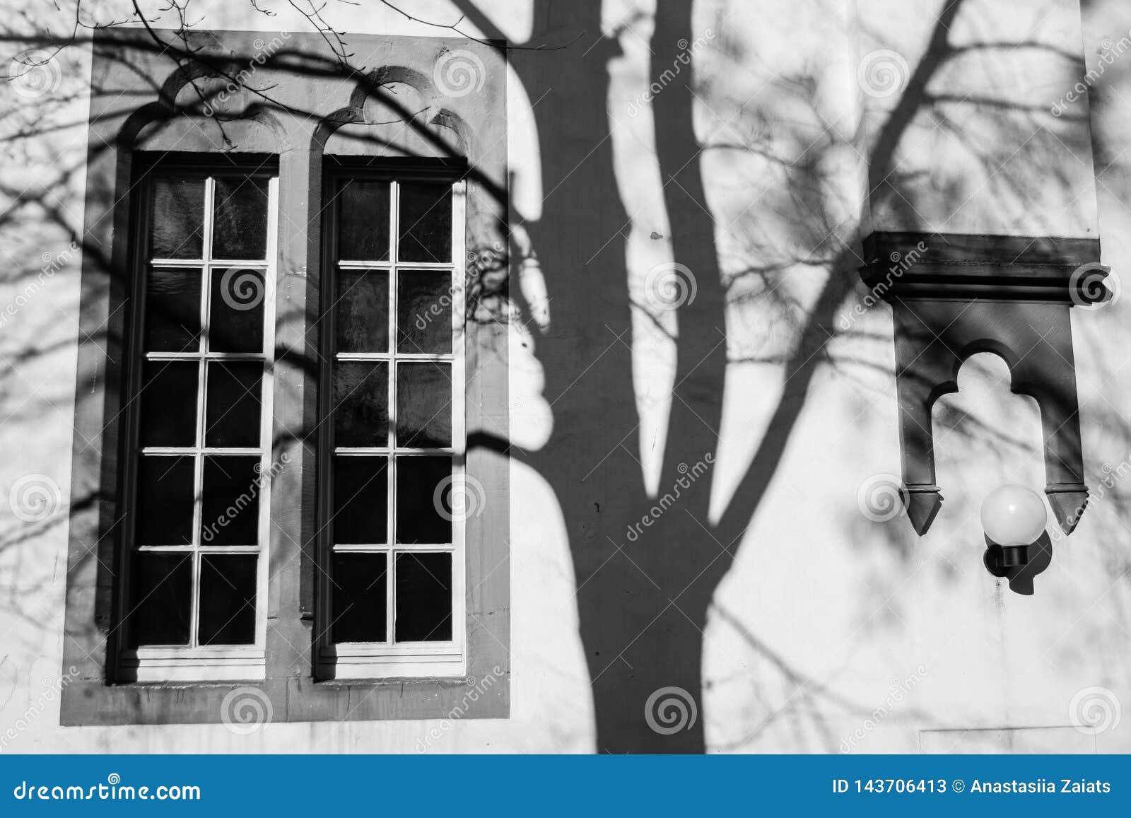 Öppet fönster och skuggor av ett träd på väggen
