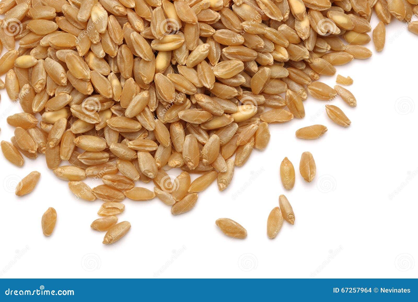Öra och korn av vetet