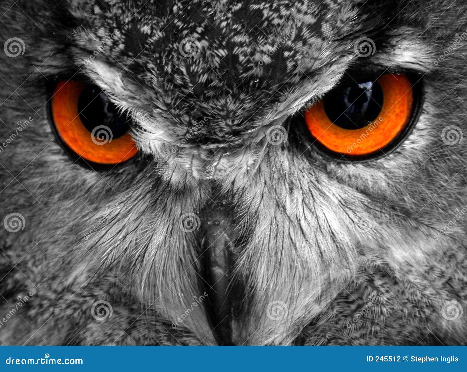 örnoscar owl