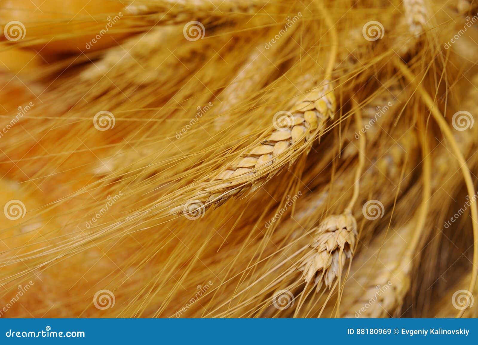 Öron av vete på en bakgrund av bröd