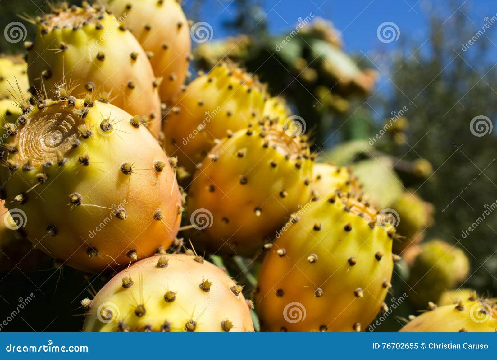 Över grova spikarna under sötsaken och den suckulenta frukten