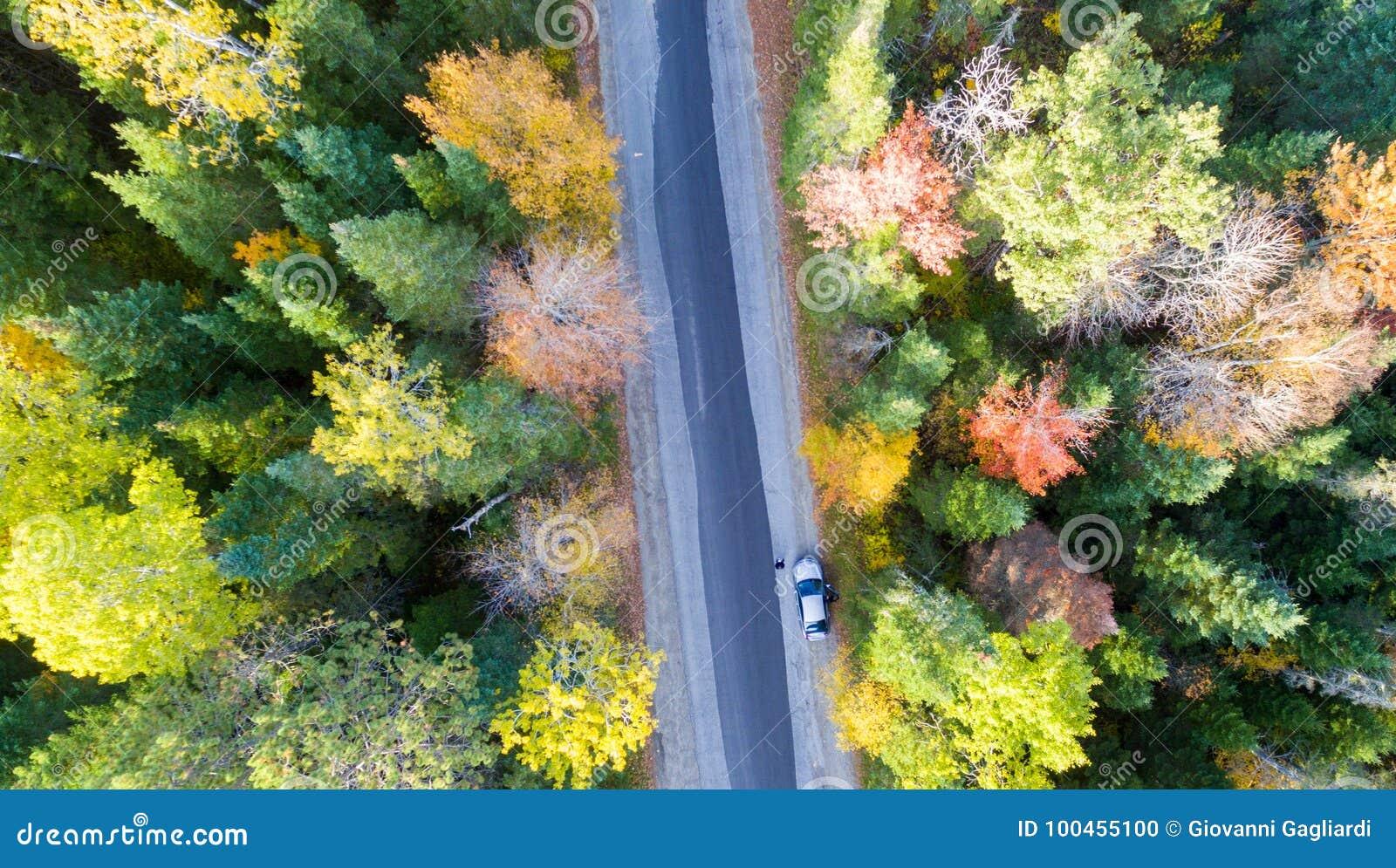 Över huvudet sikt av den lövverkträd och vägen i New England