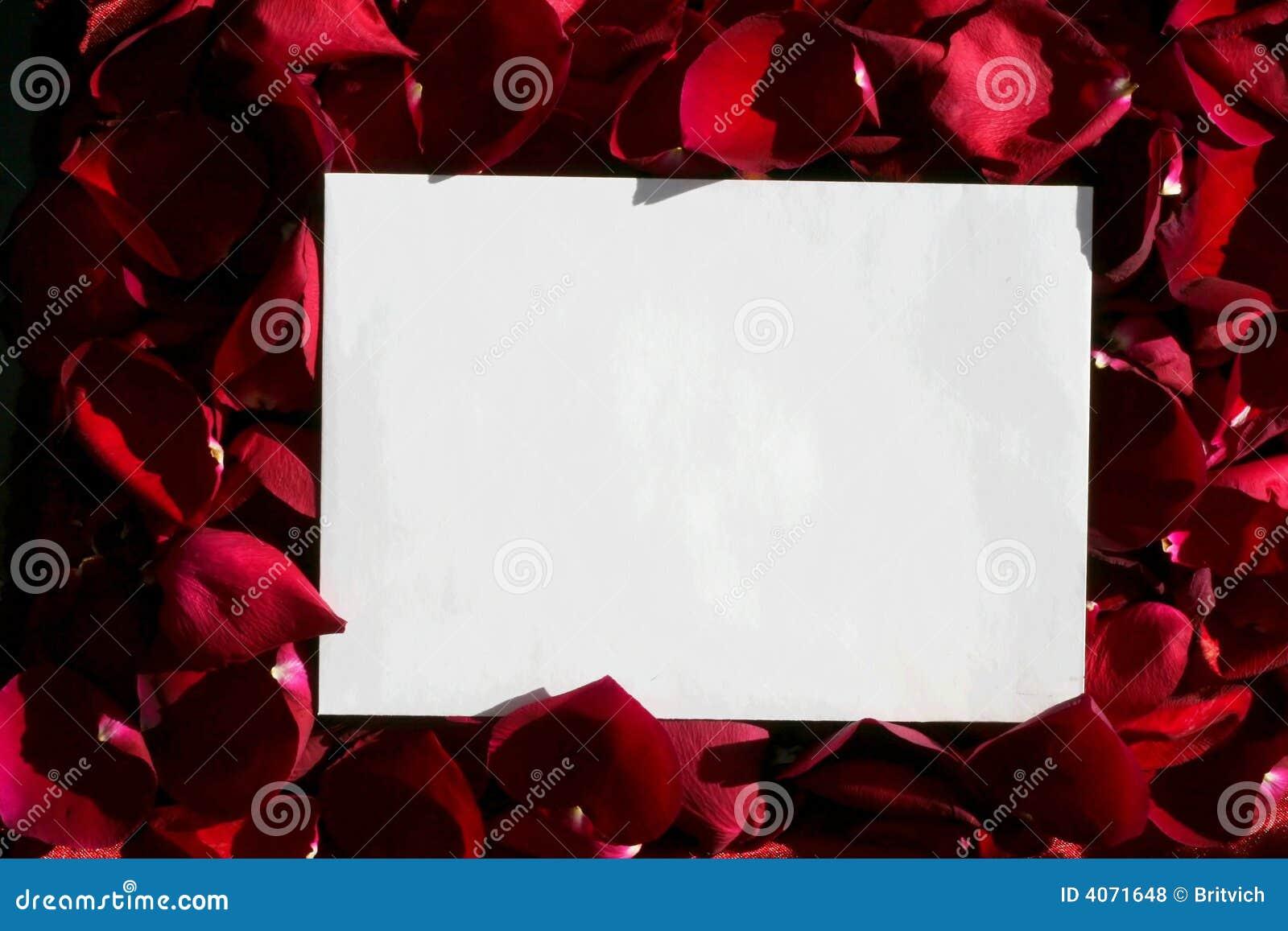 över vita paper röda ro
