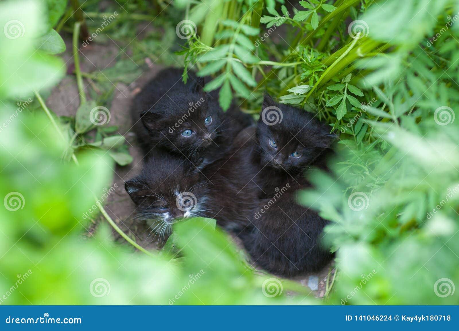 Övergav svarta kattungar, kattungar väntar på mamman, hjälper hemlösa djur