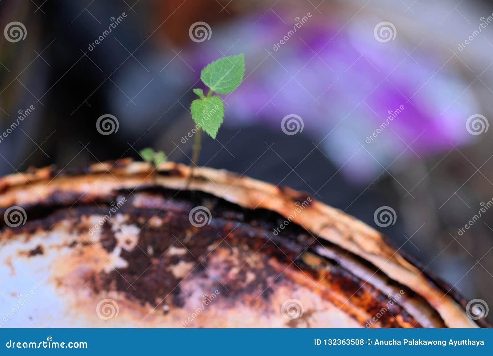 Överlevnad av unga växter som växer