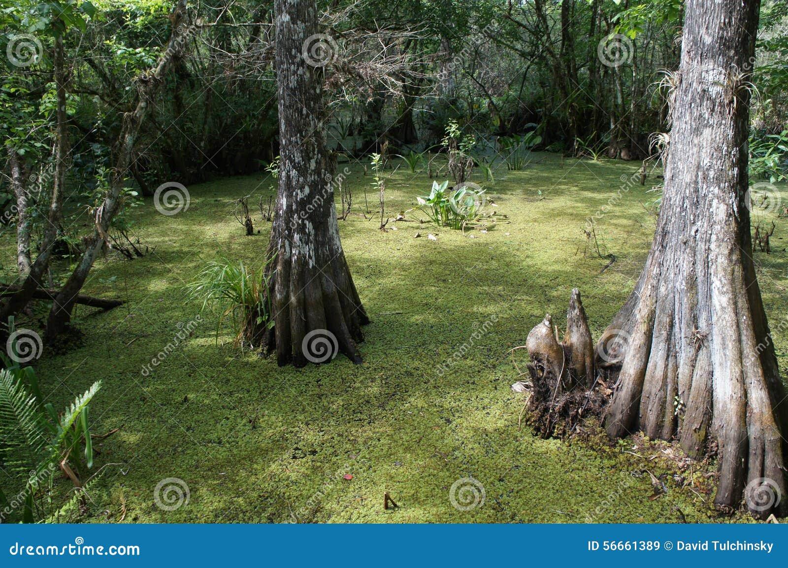 översvämma trees