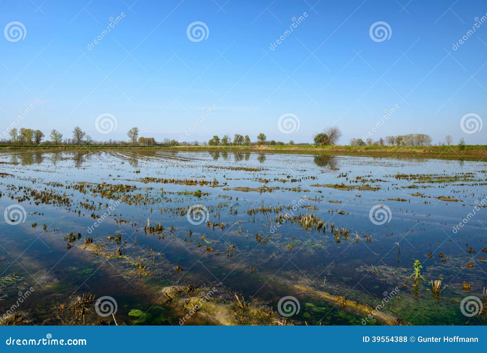 Översvämmad risfält, Lomellina (Italien)