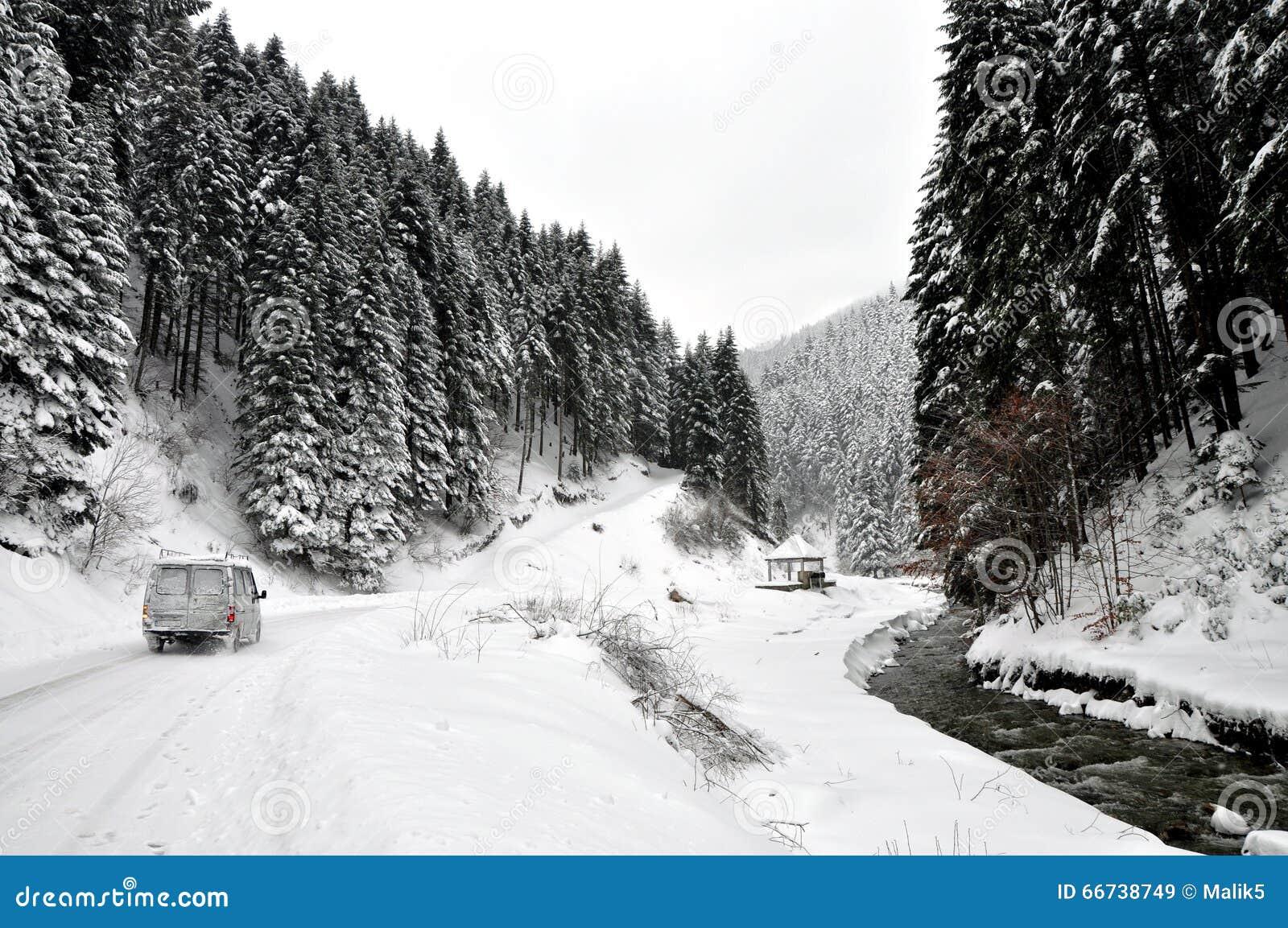Övervintra vägen i landssida med granträd
