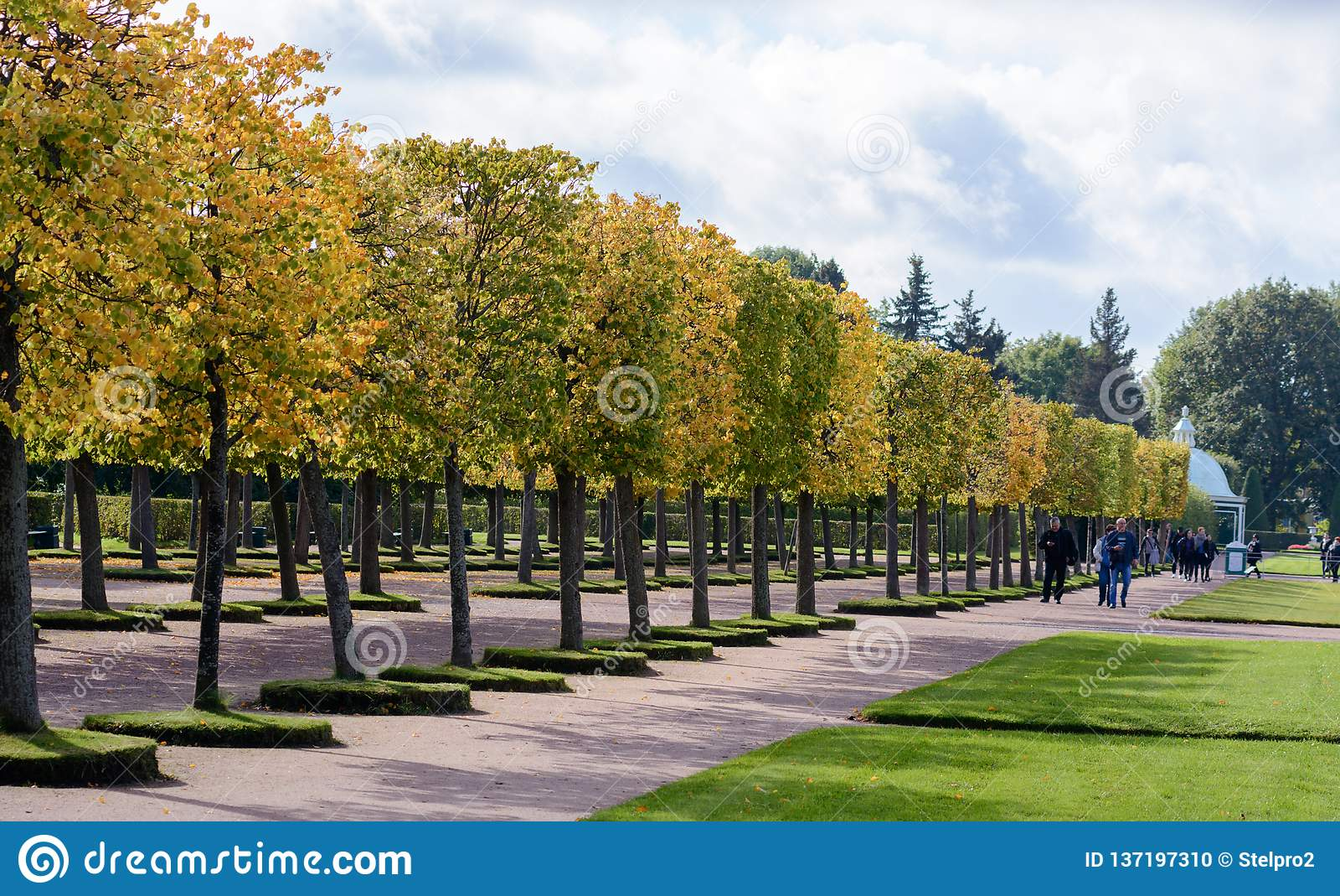 Övreträdgården av Peterhof dekoreras med en blommande grön lindaveny, som i höstsäsongen blir ett ljust gult