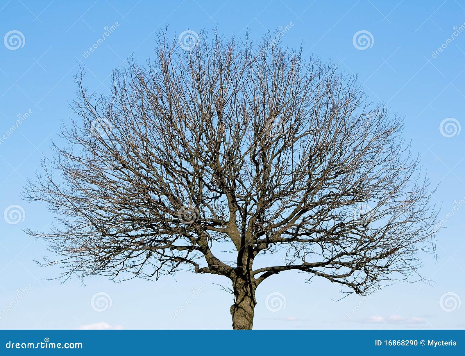 Única árvore