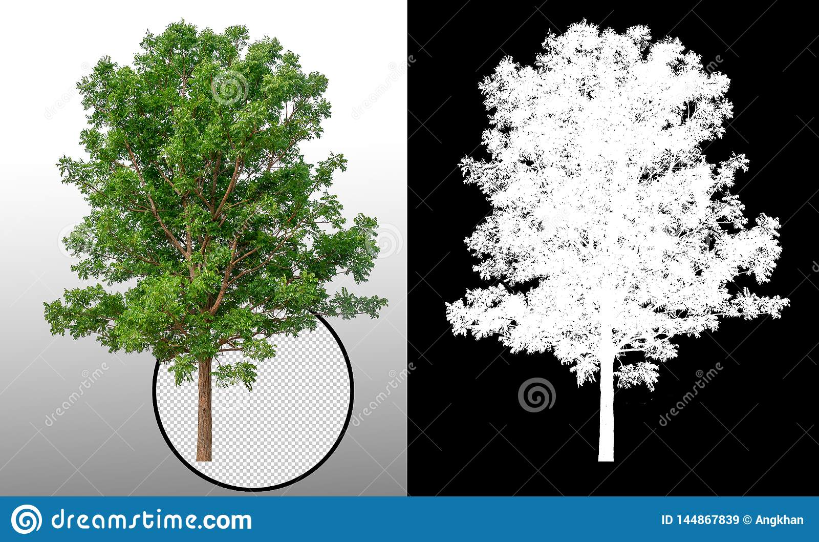 Única árvore com trajeto de grampeamento