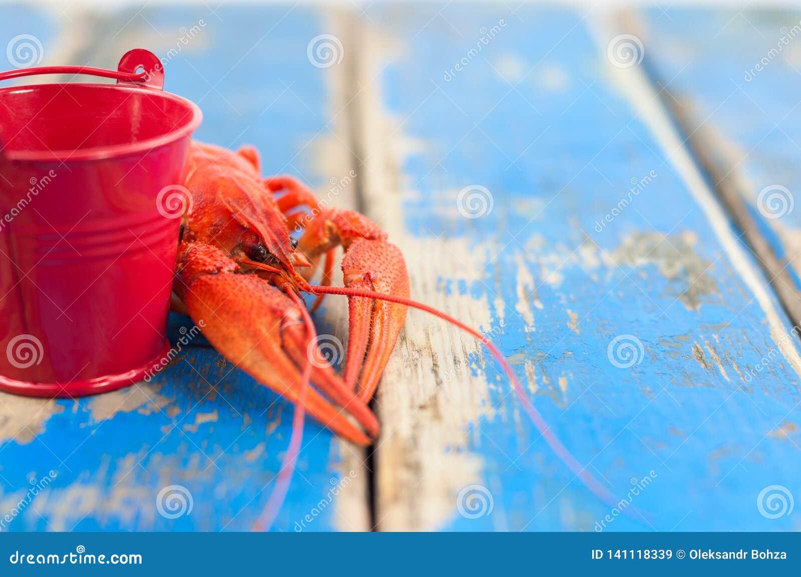 Únicas lagostas fervidas vermelhas inteiras atrás da cubeta vermelha pequena vazia do metal