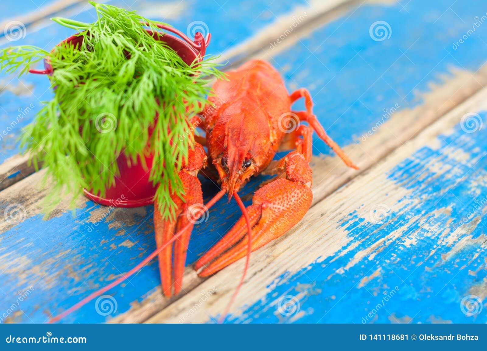 Únicas lagostas fervidas vermelhas inteiras e cubeta vermelha pequena do metal com aneto verde fresco