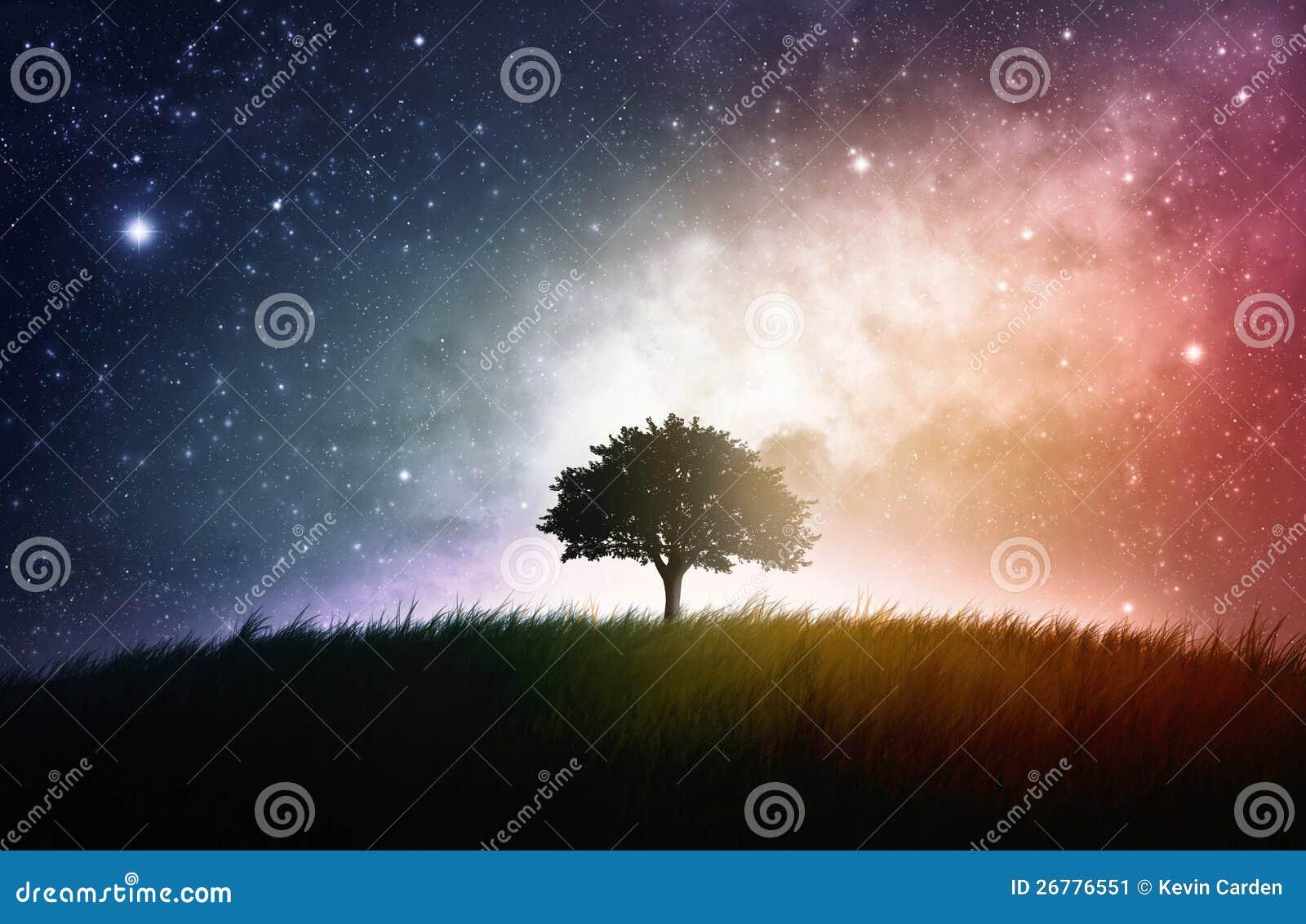 Único fundo do espaço da árvore