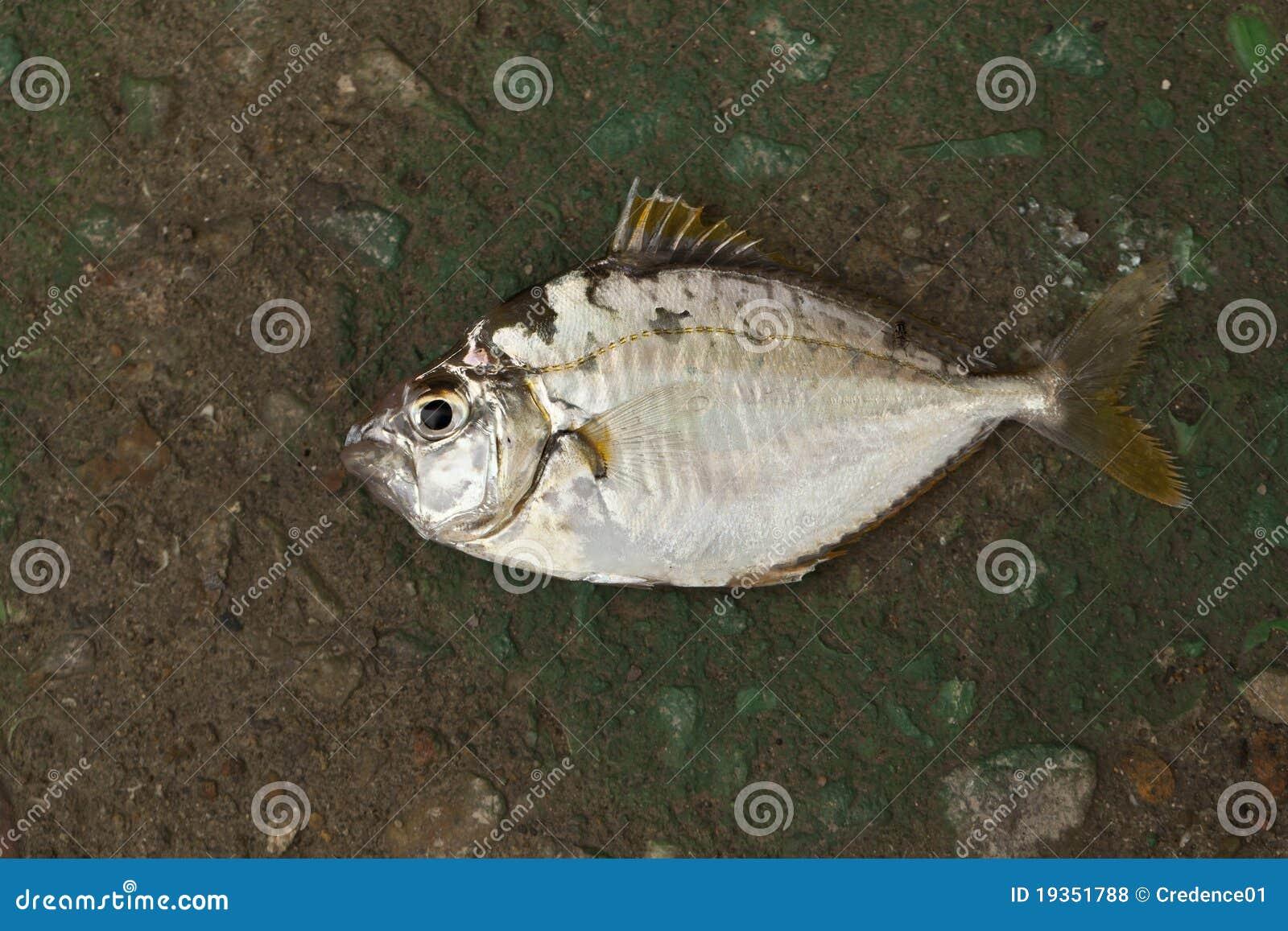 Únicos peixes na terra