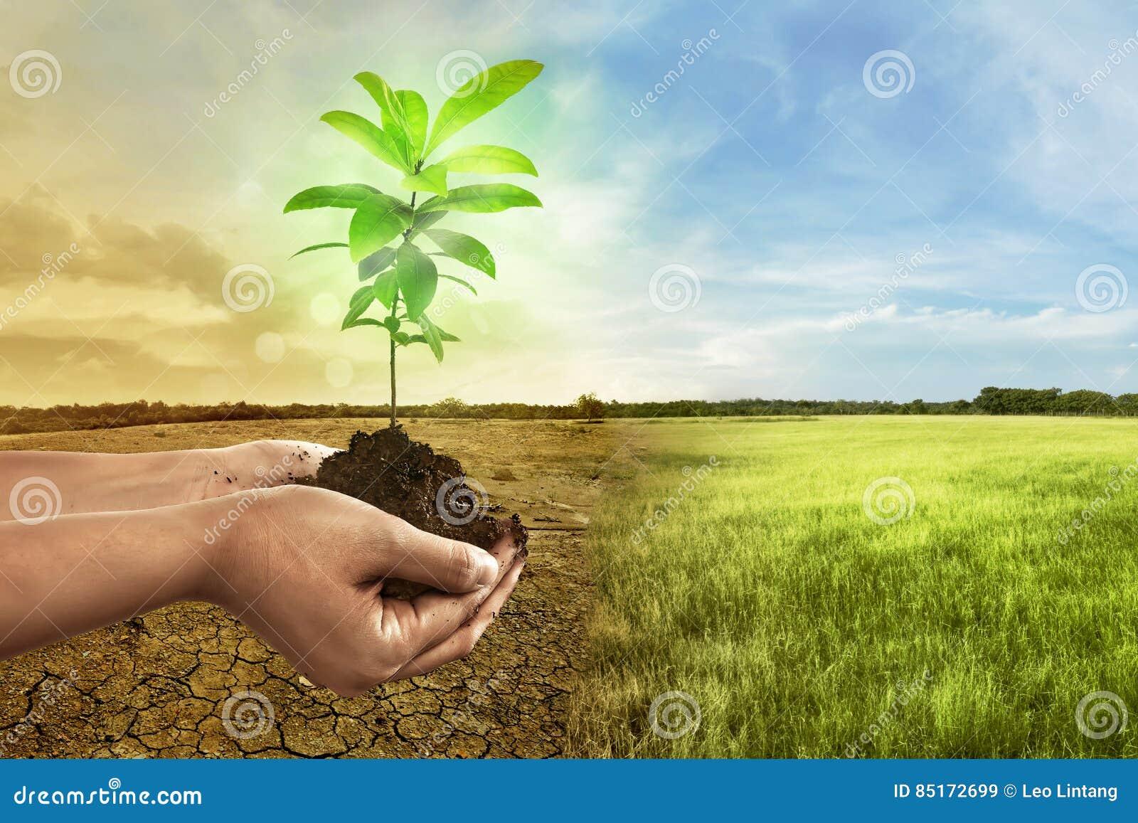 Übergeben Sie das Halten der Anlage auf Boden herein über gebrochener Erde