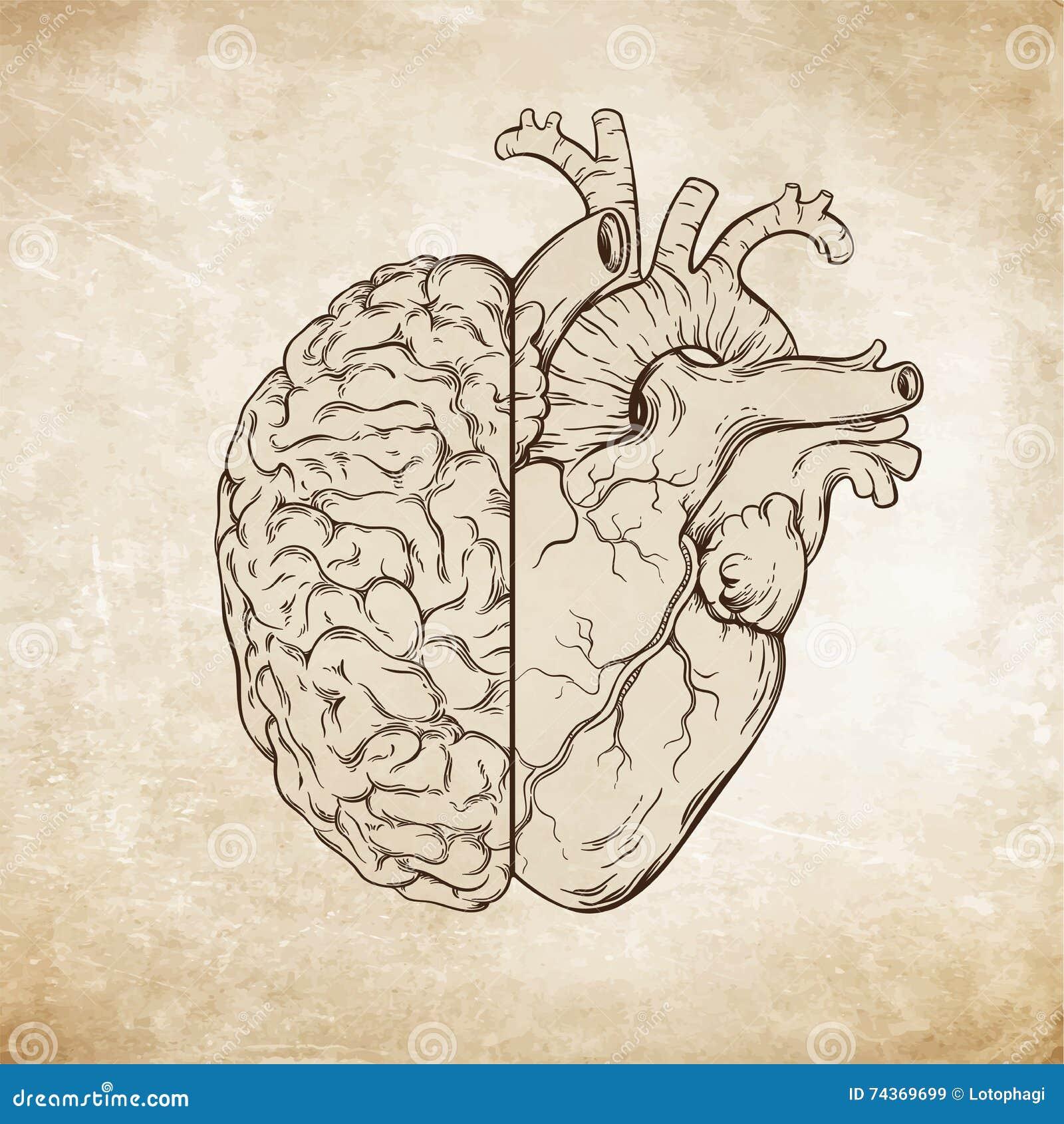 Übergeben Sie Gezogener Linie Kunst Menschliches Gehirn Und Herz Da ...