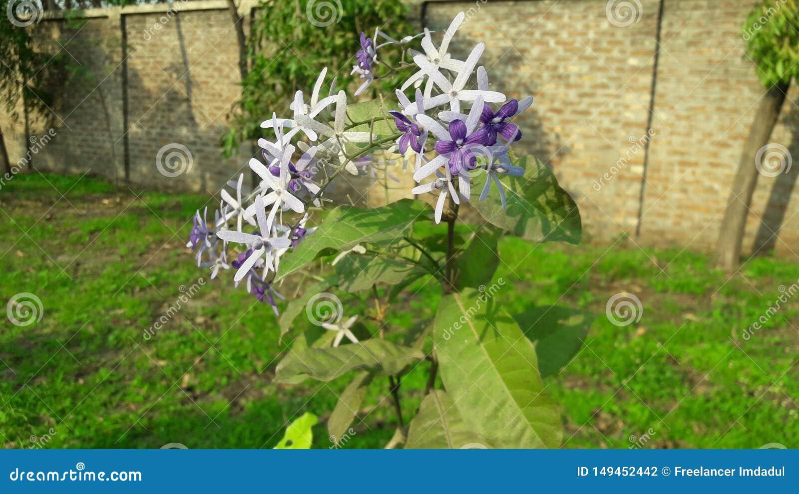 ?berraschende Blume mit hellem Hintergrund