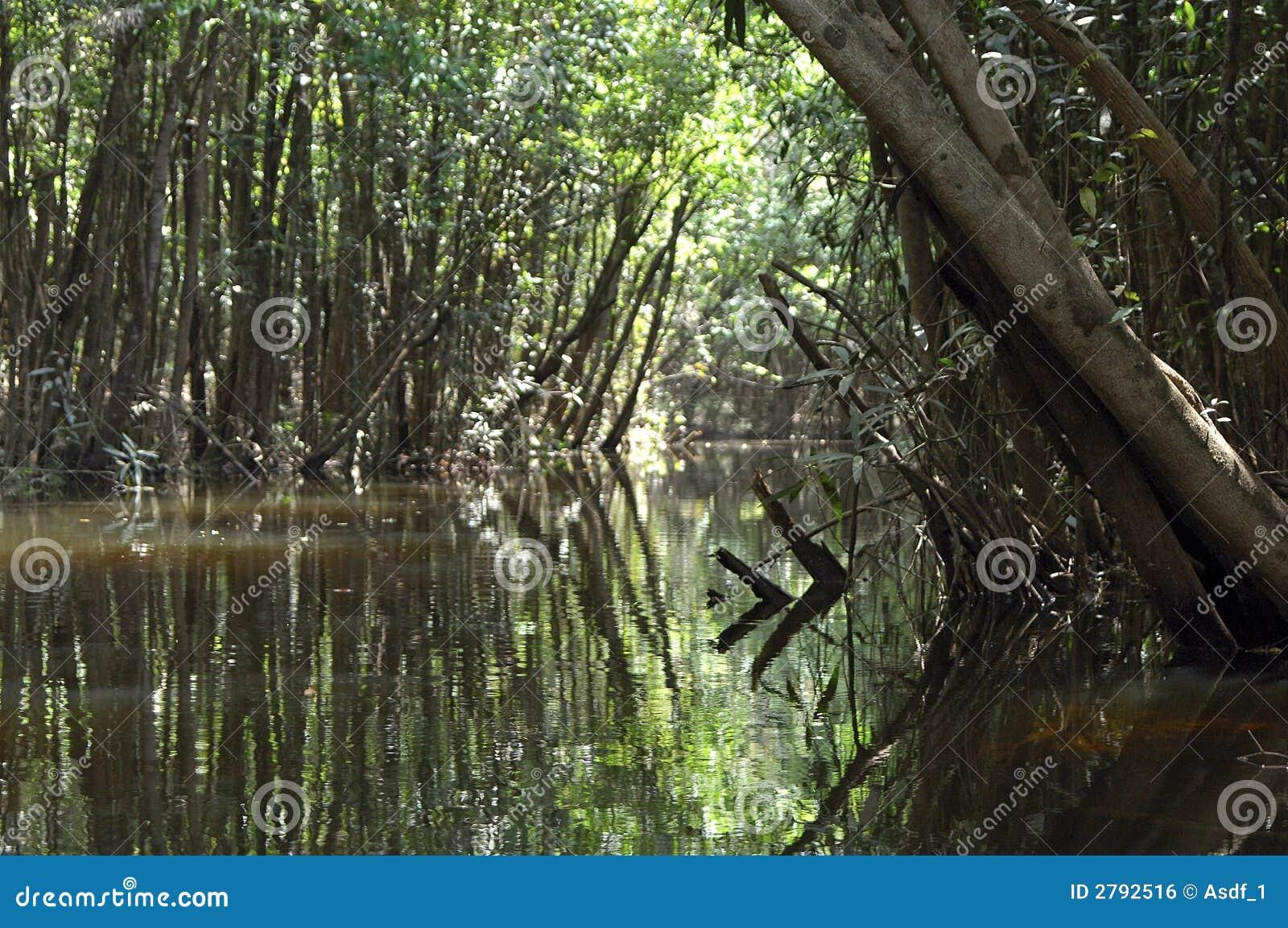 Überschwemmter Amazonas-Regenwald
