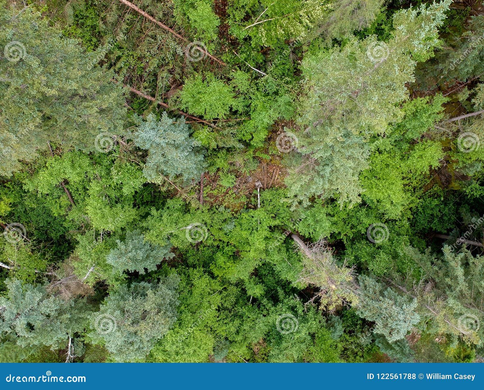 Übersteigen Sie hinunter Ansicht von Bäumen des Waldes in der Spearfishschlucht South Dakota