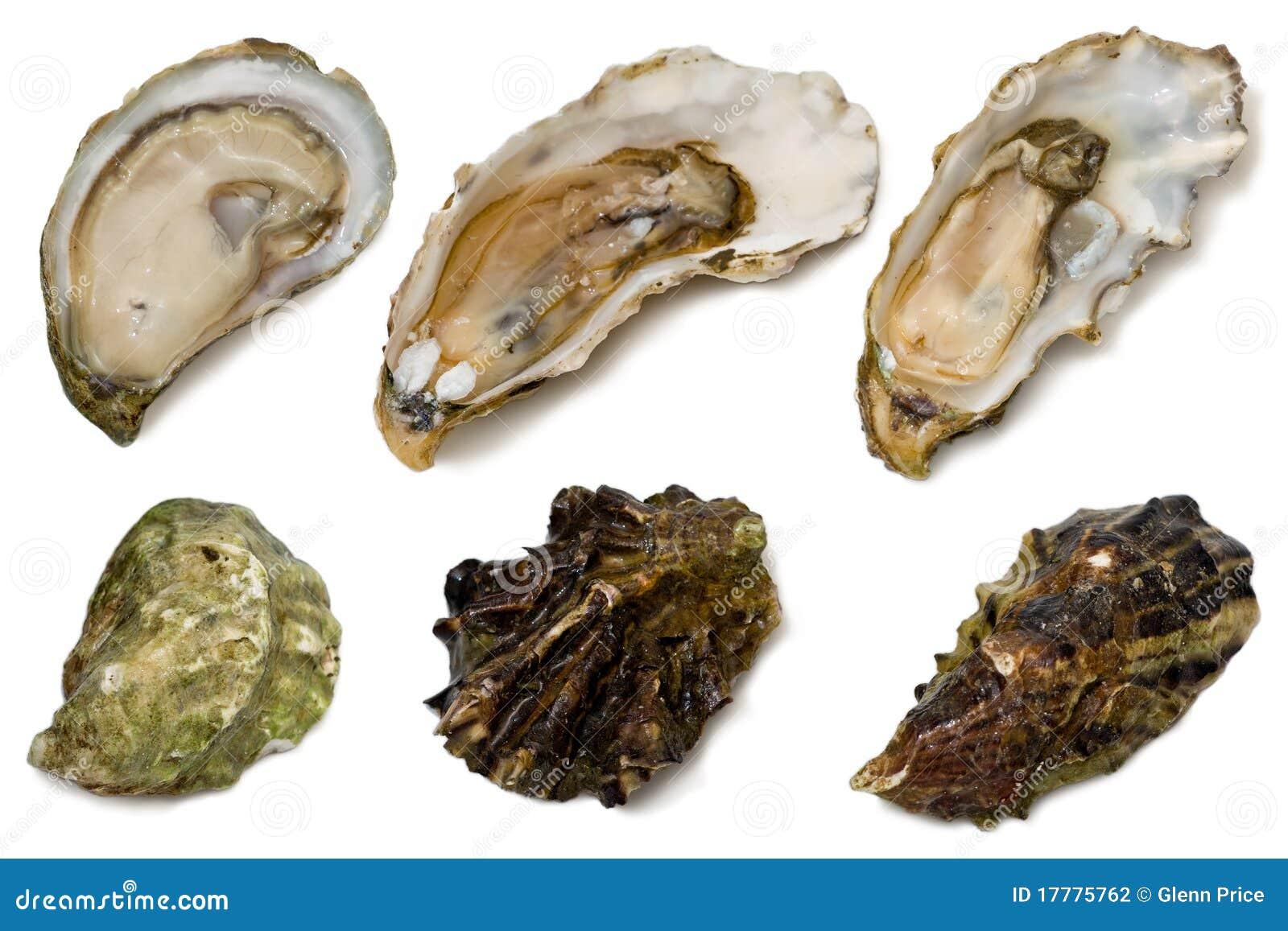 宫城牡蛎步行者白色