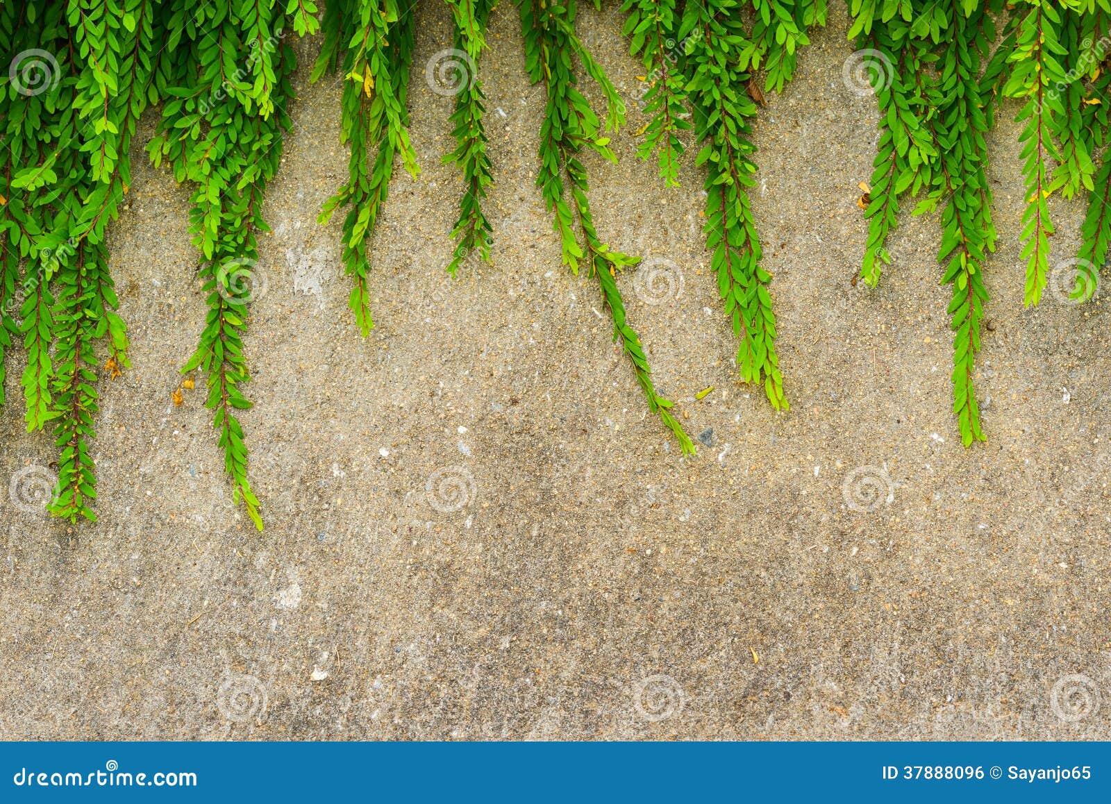 难看的东西墙壁背景的新鲜的绿色叶子植物