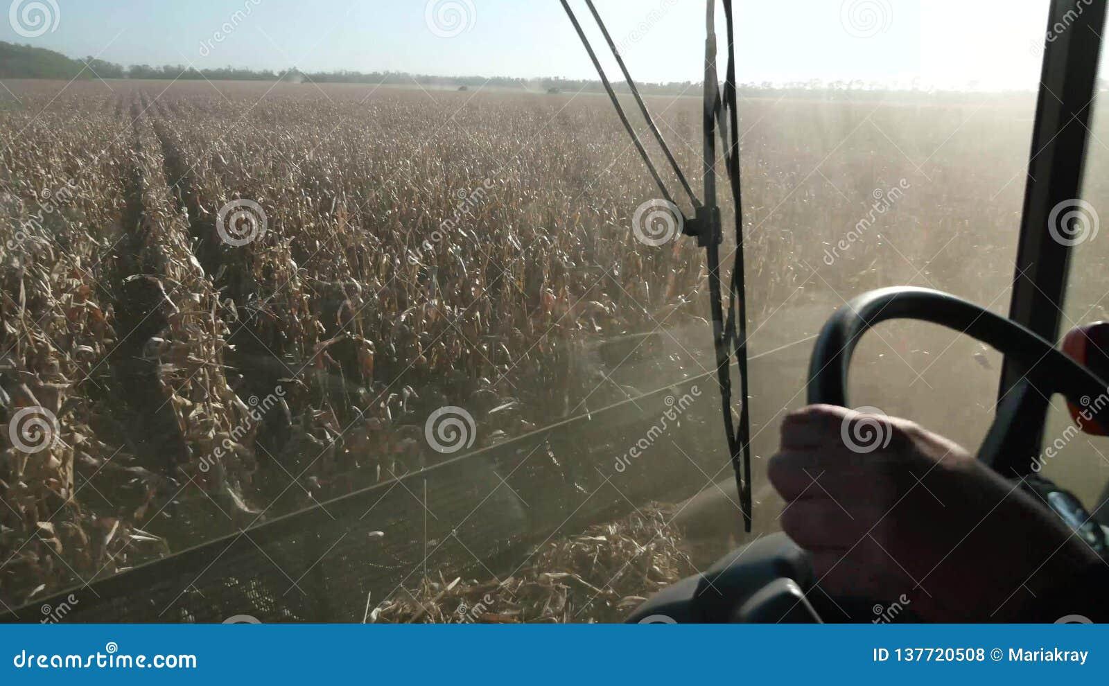 Łączy zbierać kukurudzy, widok od kierowcy cabine