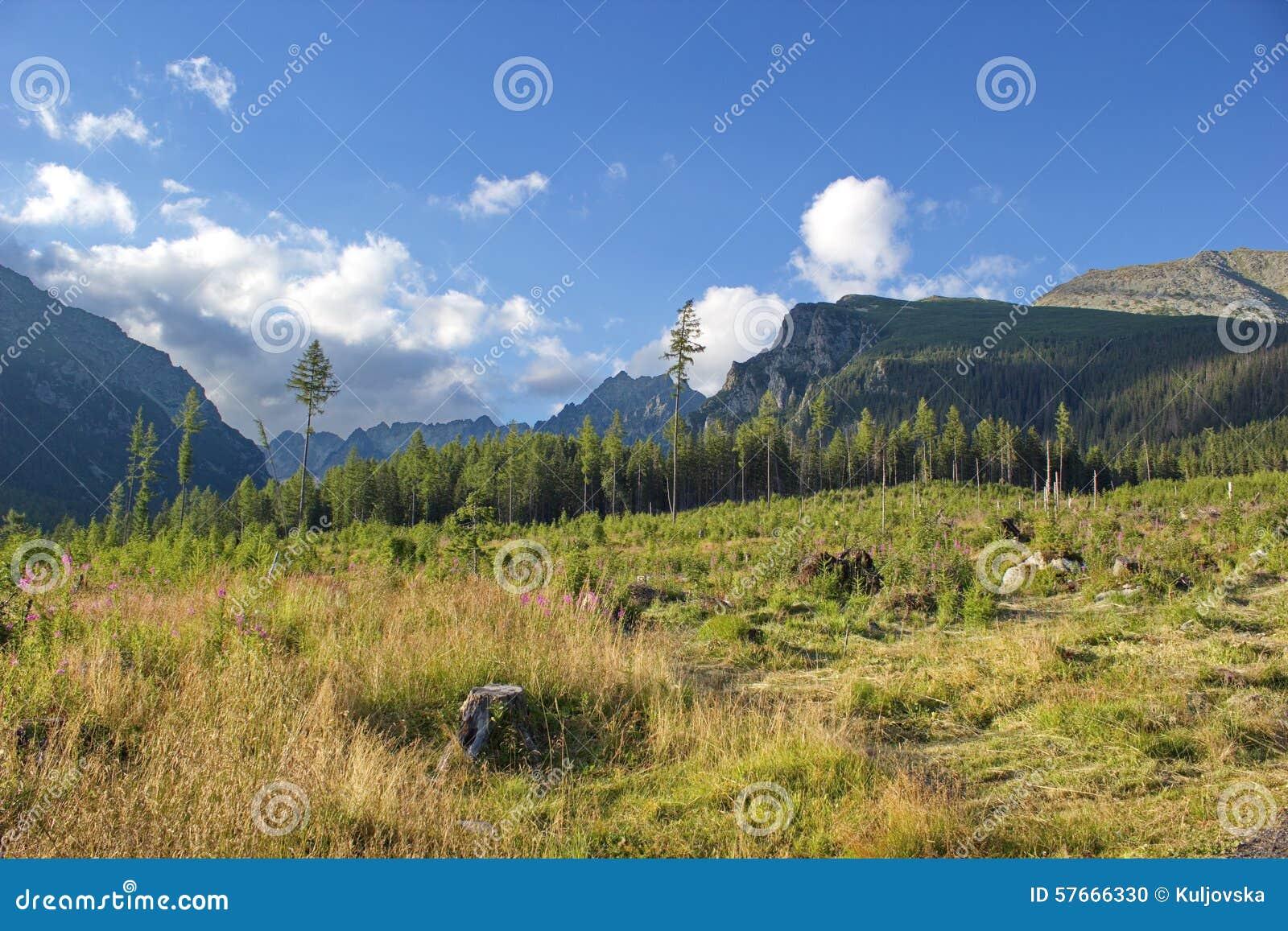 Łąka i Wysokie Tatras góry