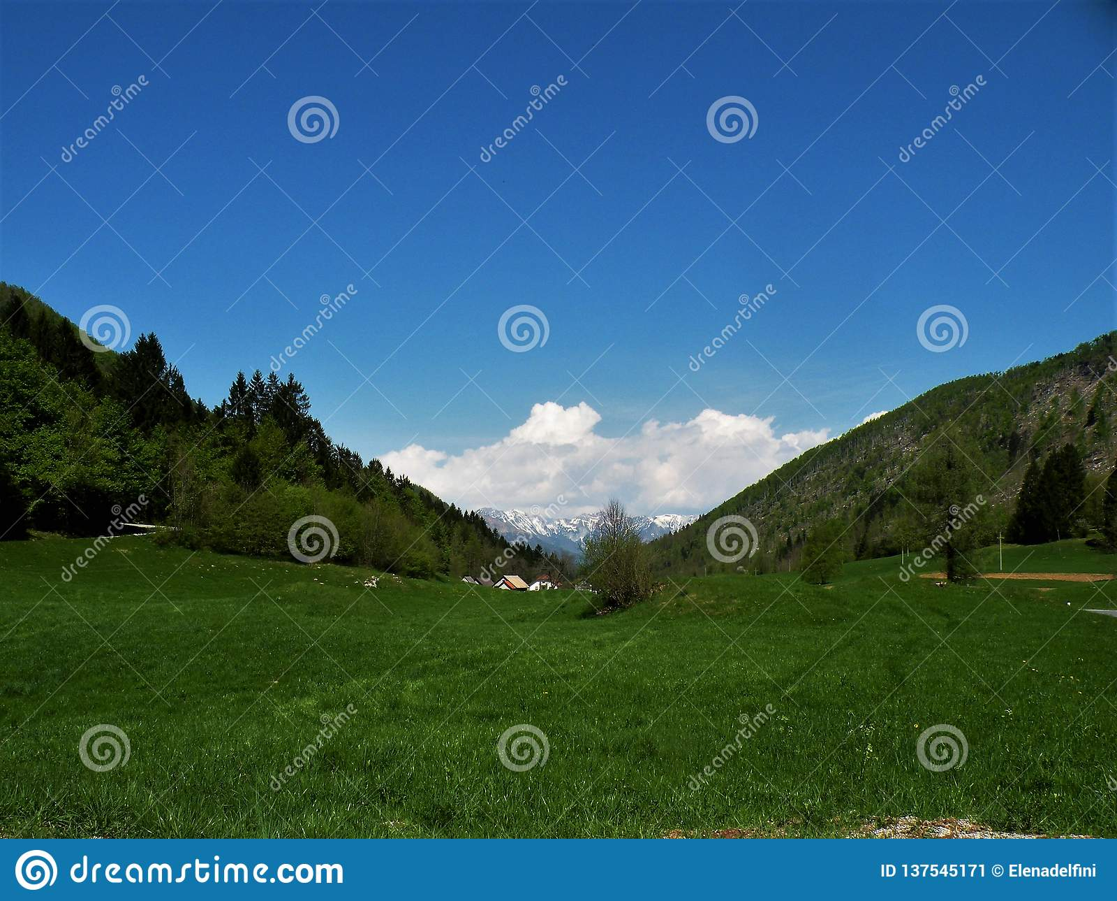 Łąka z świerczyną i skoszona trawa z kwiatami, w tle tam jesteśmy niektóre wzgórzami i domami Zielona nietknięta natura Sposób o