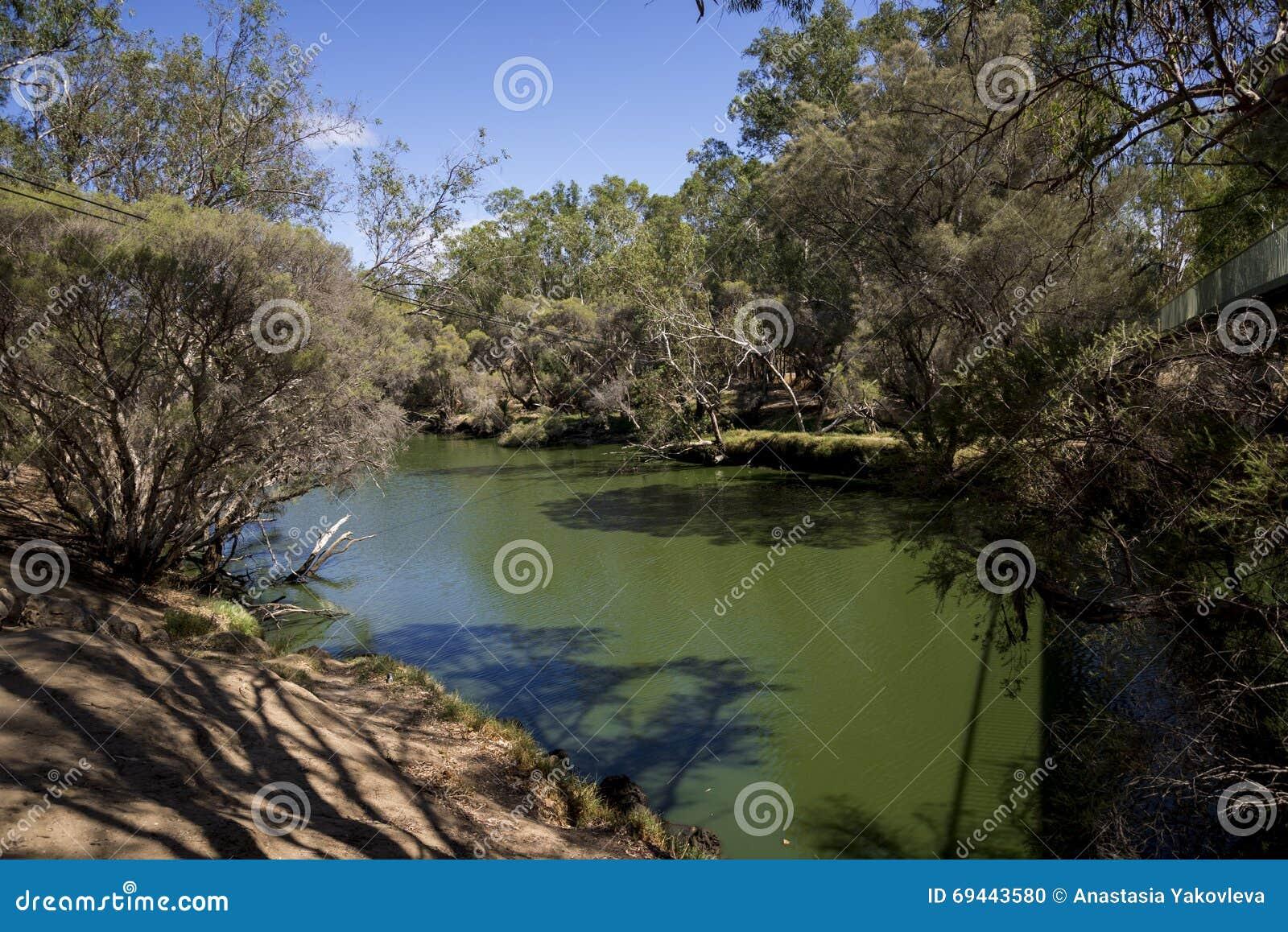 Łabędzi Rzeczny widok w Maali mosta parku, Łabędzi Dolinny wino region, W