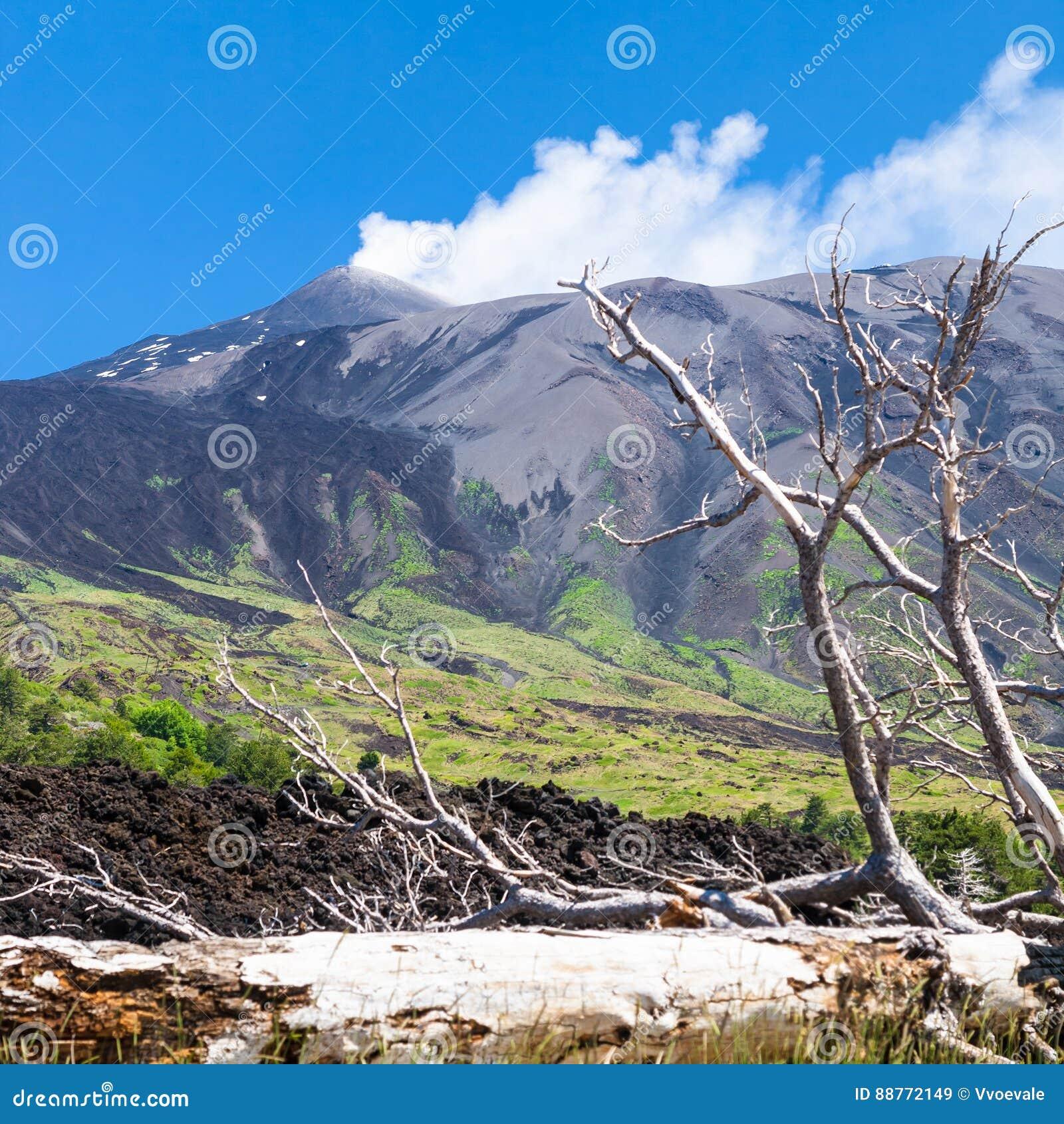 Łamany drzewo w wzmacniającym lawowym przepływie na skłonie Etna