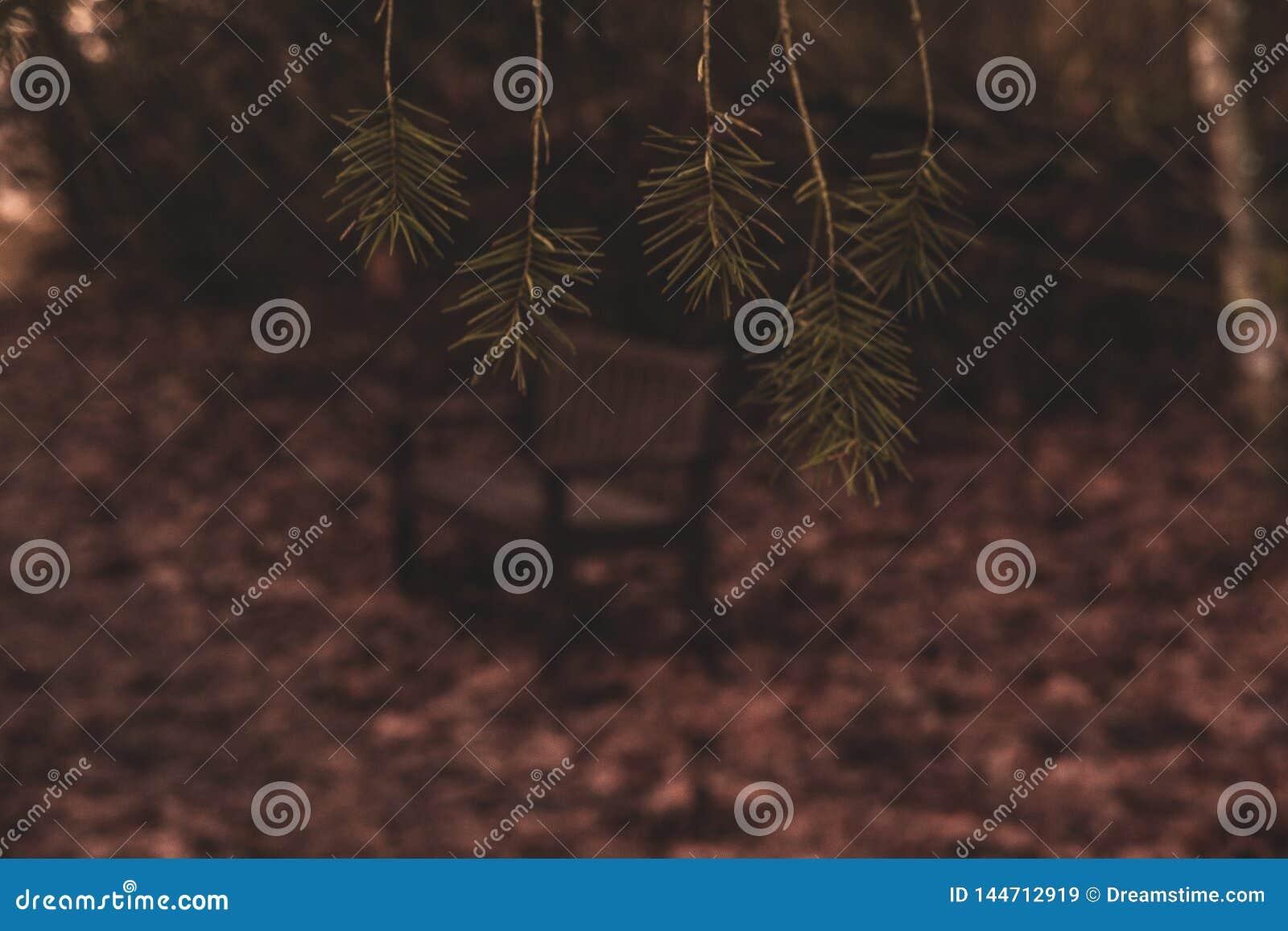 Ławka pokój przez Sosnowych liści