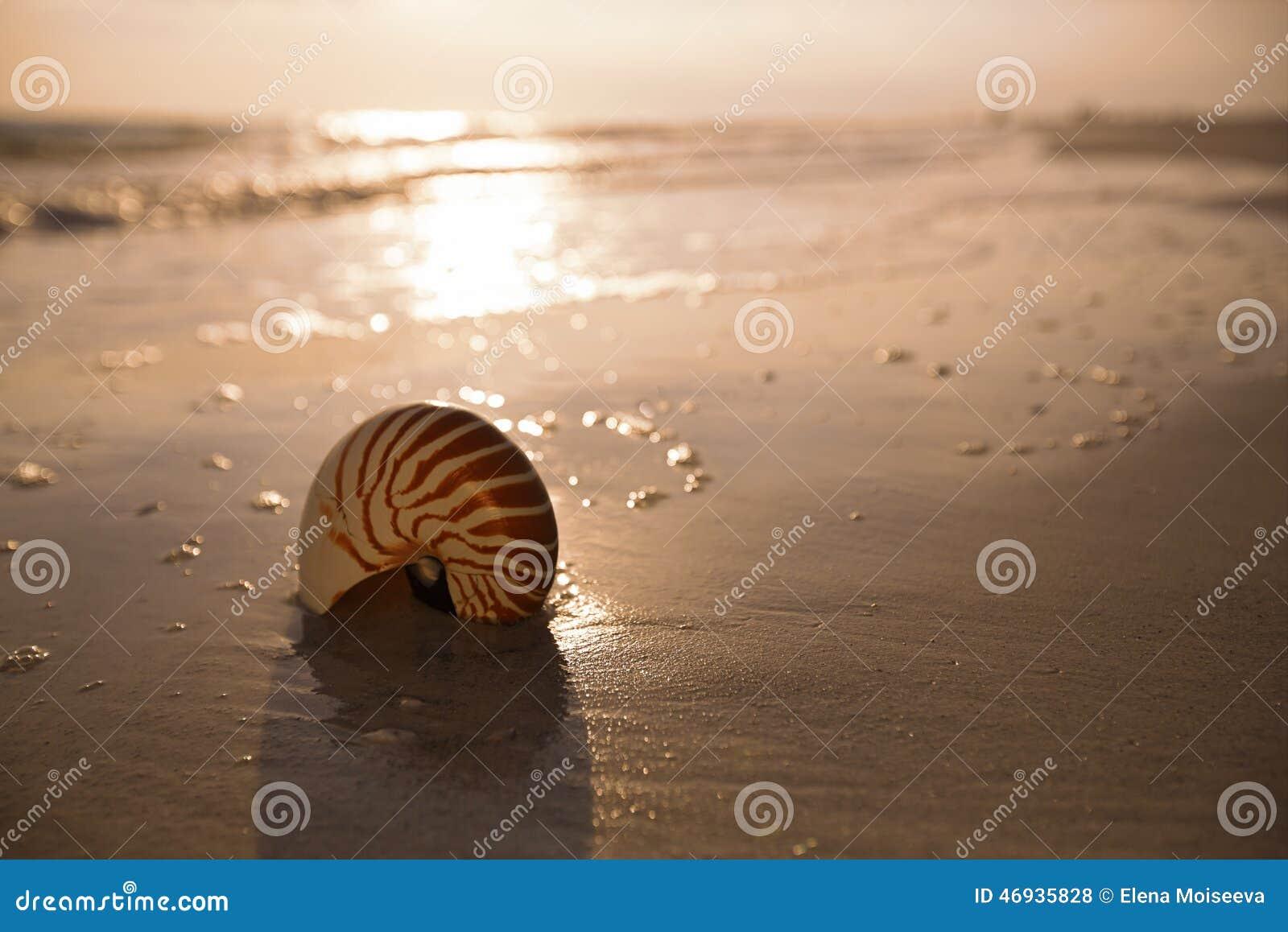 Łodzik skorupa na dennym ocean plaży piasku z ciemnym zmierzchu światłem