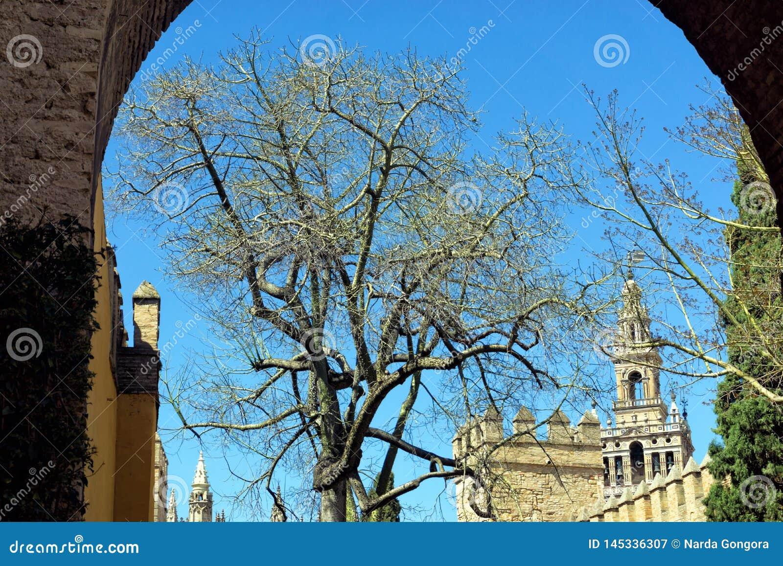 Łuk obramia górną część katedra Seville, Hiszpania