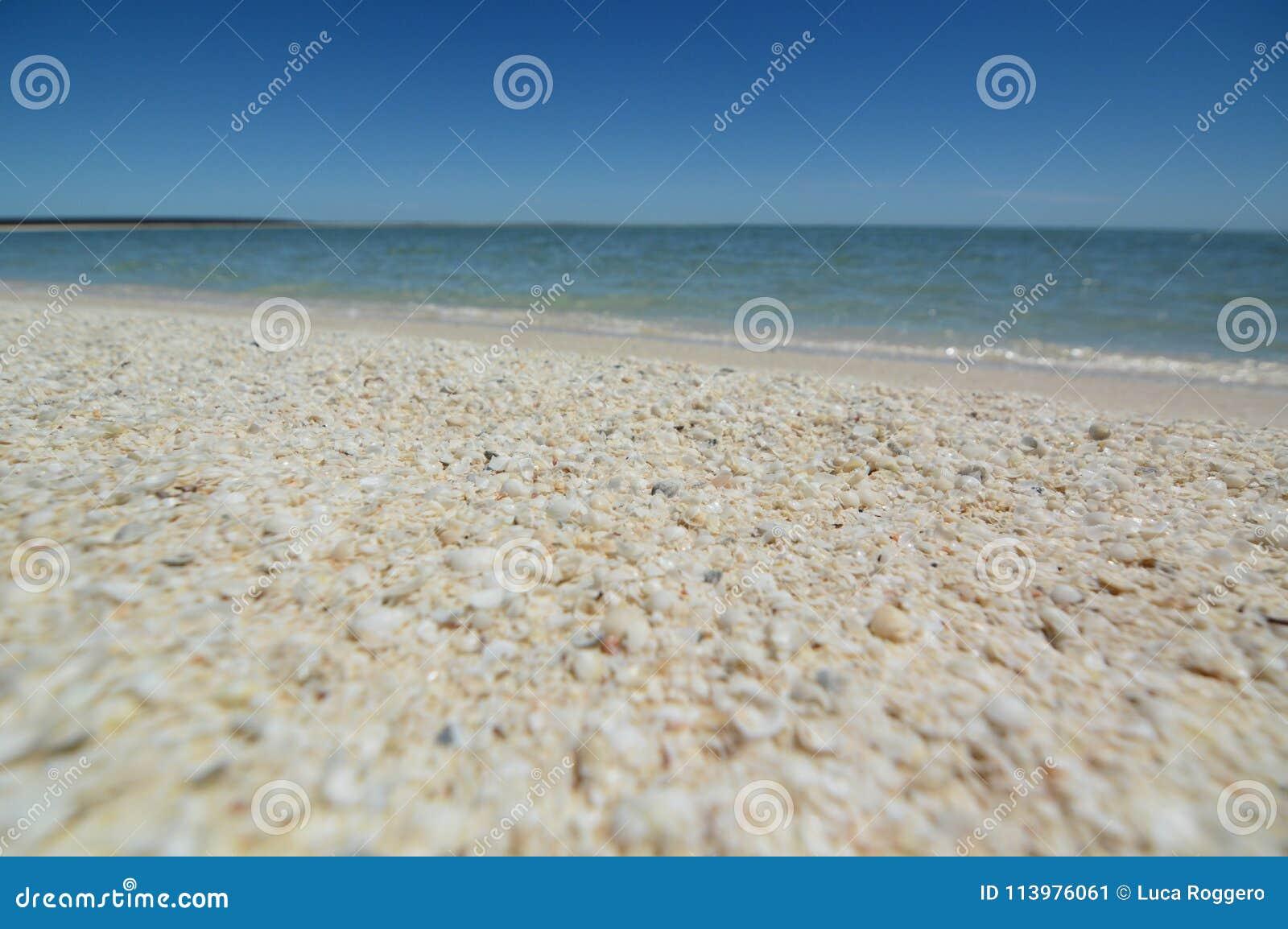 Łuska plażę Denham Rekin zatoka Zachodnia Australia