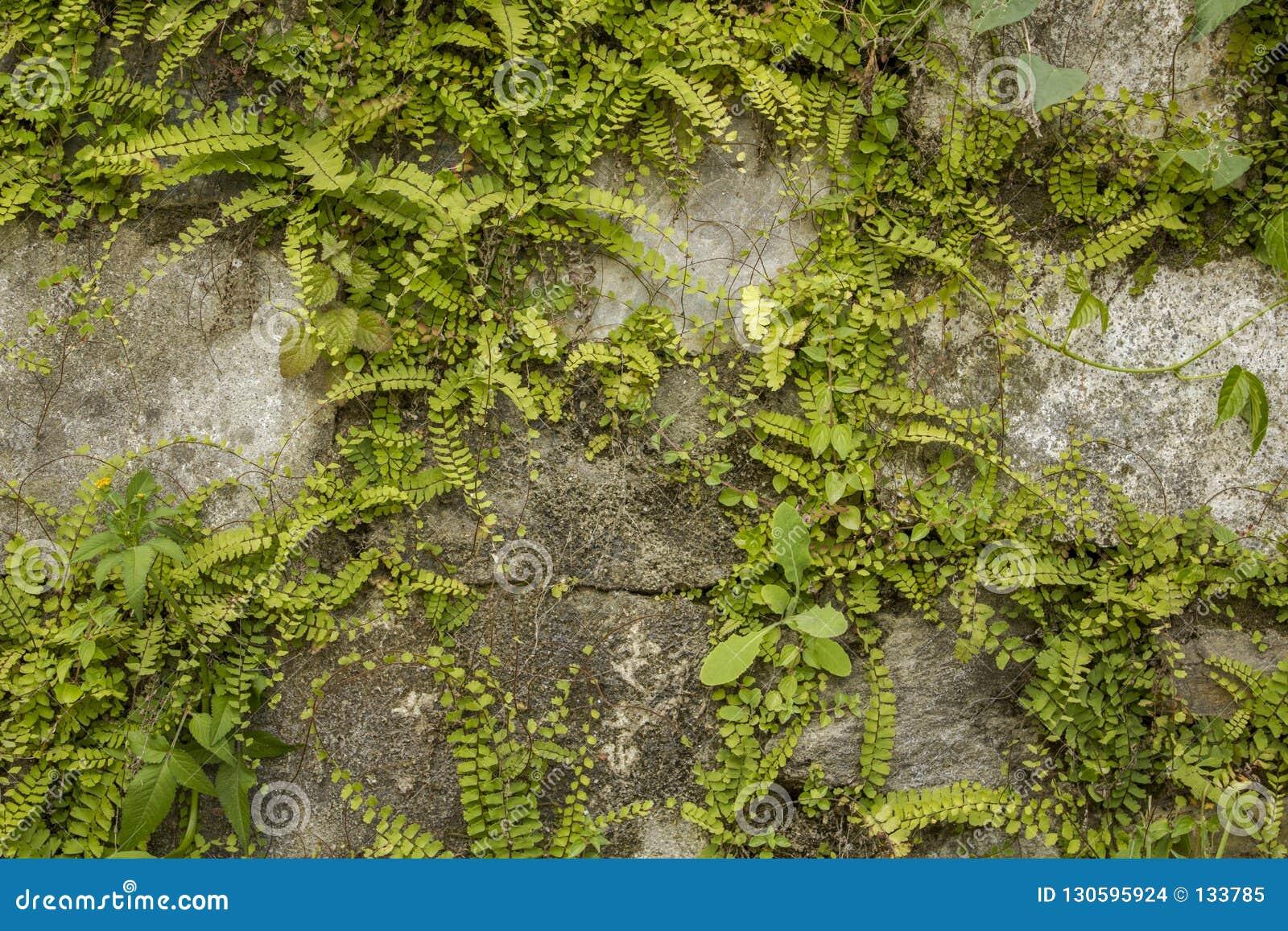 Ściana szarość kamienie z obfitą zieloną roślinnością projekta wysoki ilustraci krajobrazu planu fabuły postanowienie