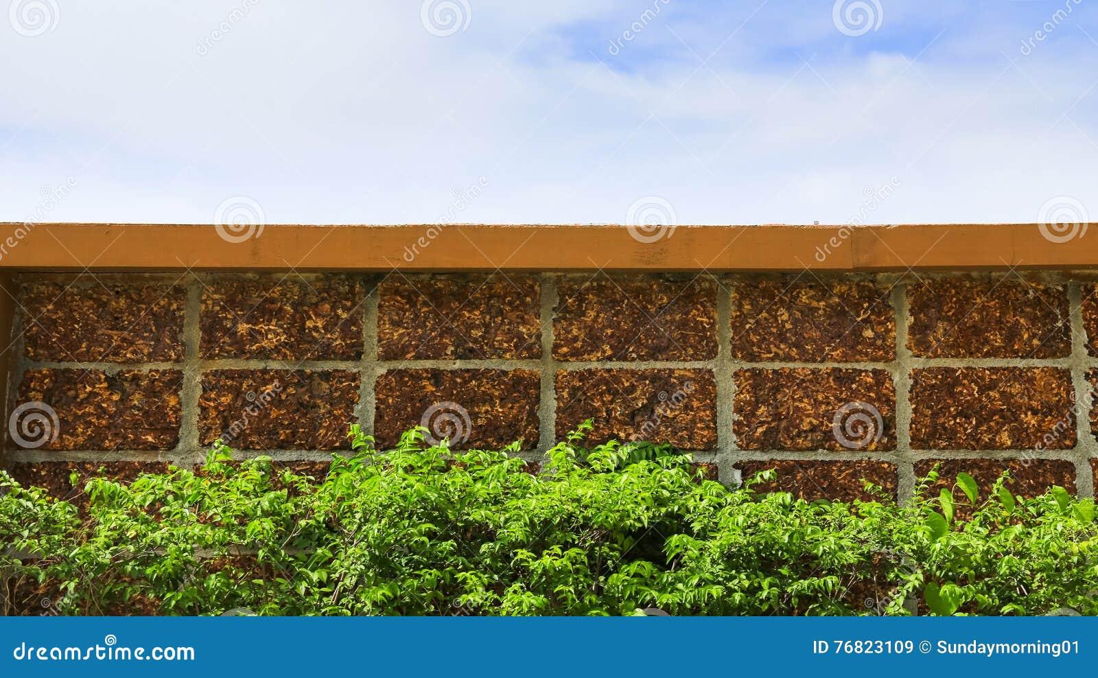 Ściana z cegieł, zieleni niebieskie niebo i liść i