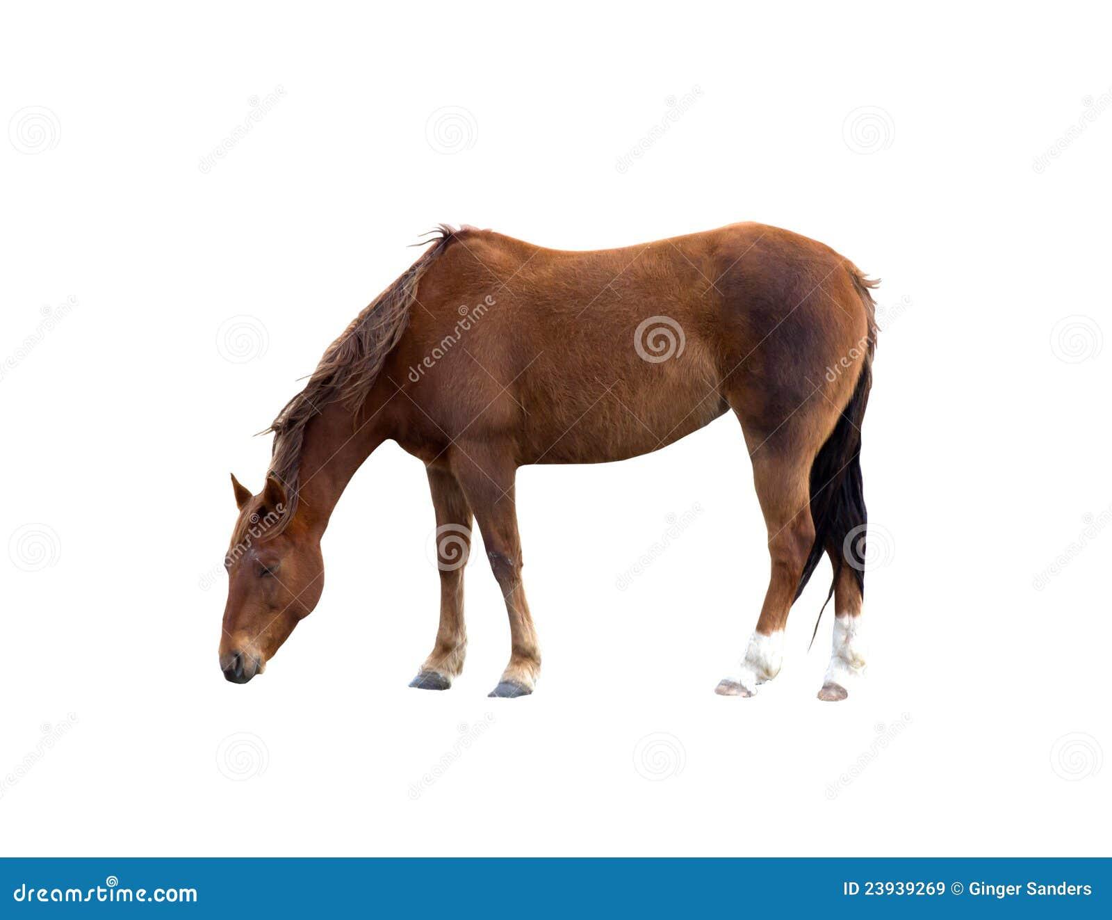 ścieżka ścinku pastwiskowy koń odizolowywał ścieżkę pojedynczą