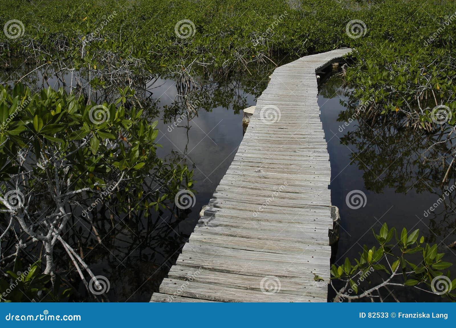 ścieżka drewniana