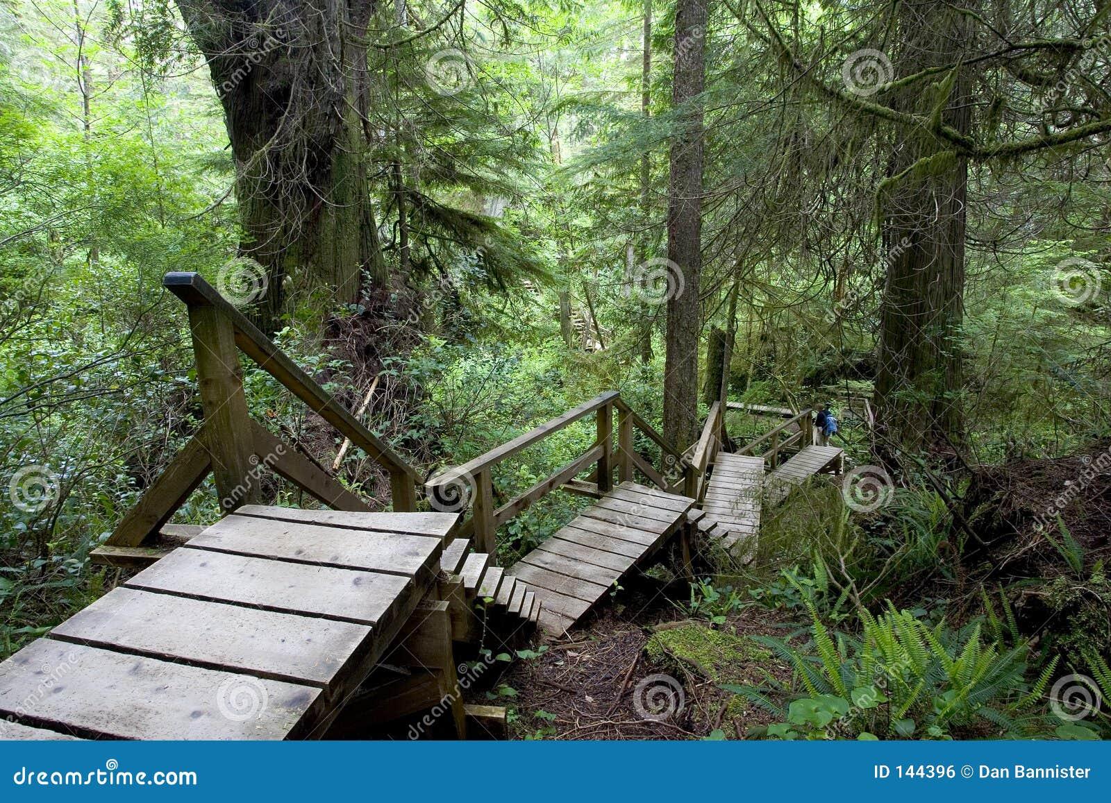ścieżka lasów deszczowych
