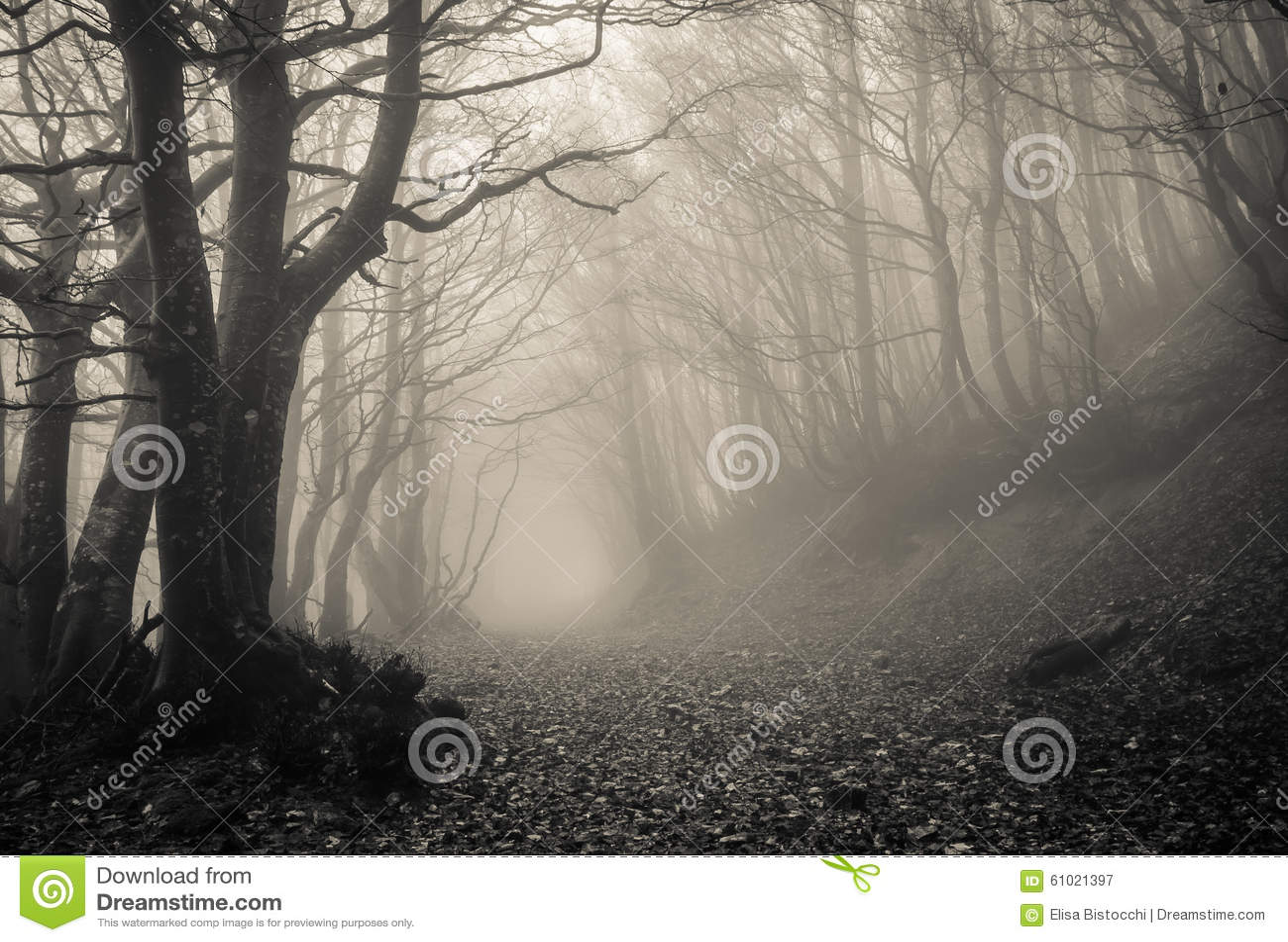 Ścieżka na gothic lesie Monte Catria, Marche