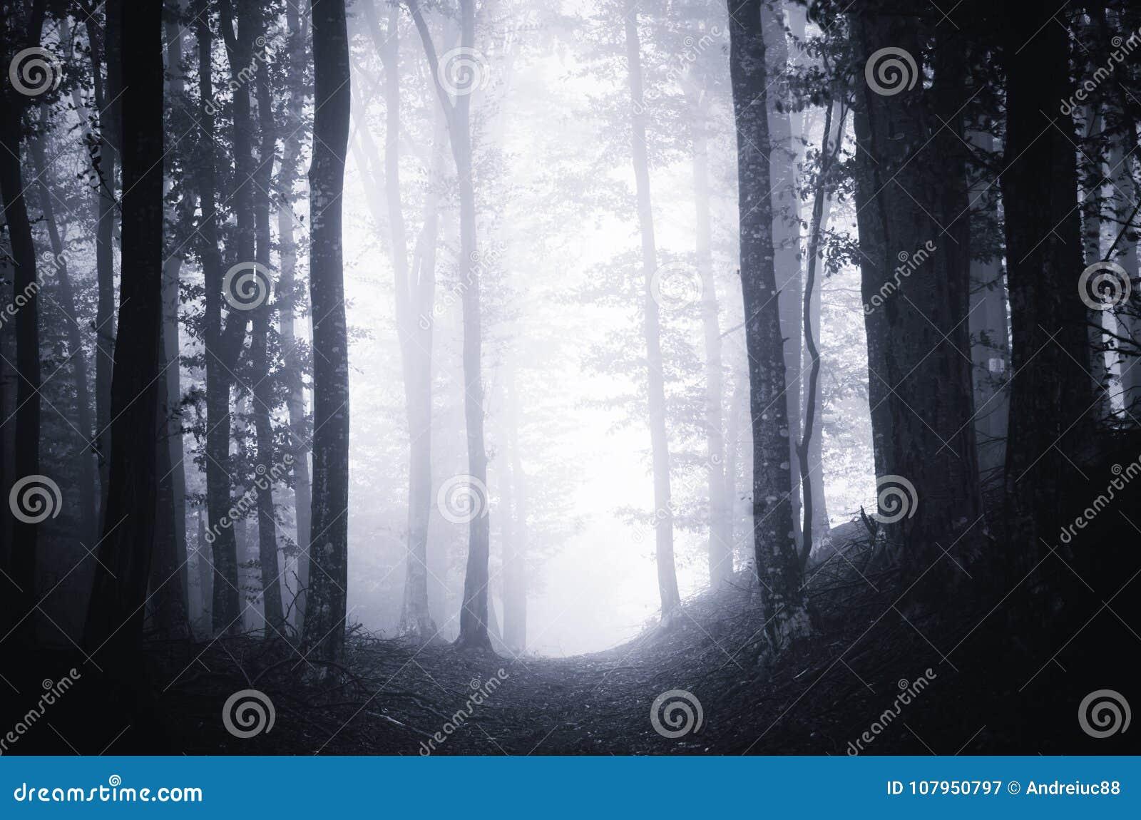Ścieżka przez ciemnego markotnego lasu z mgłą