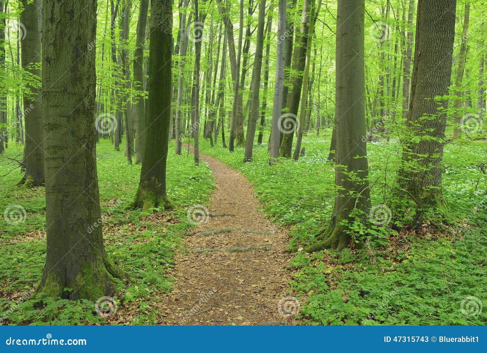 Ścieżka przez lasu