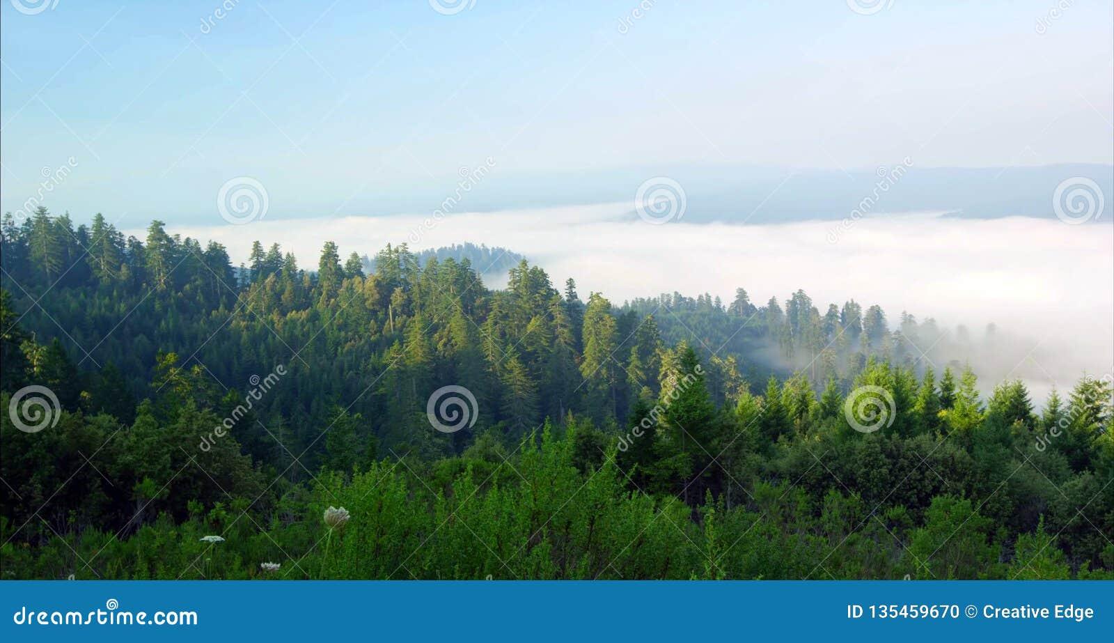 Ścieżka Przez lasu, Redwoods obywatela & stanów parków, Kalifornia