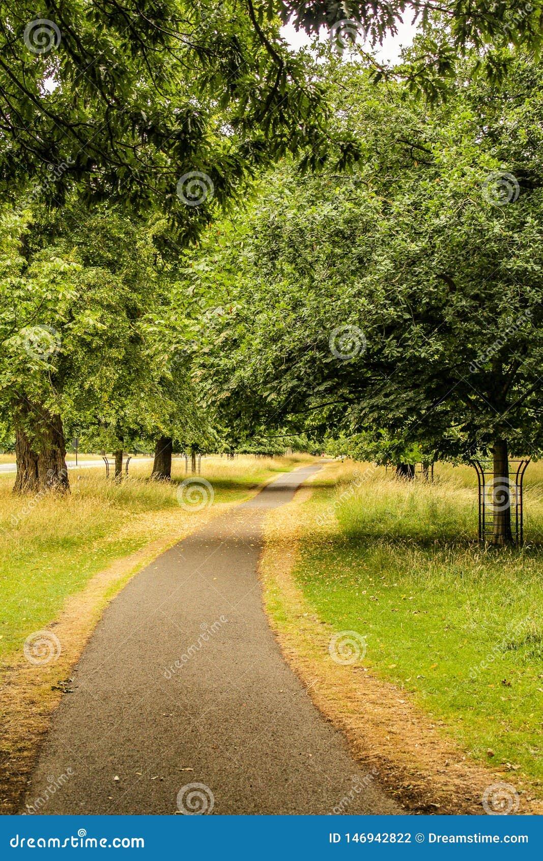 Ścieżka przez lasu w późnym lecie, Irlandia
