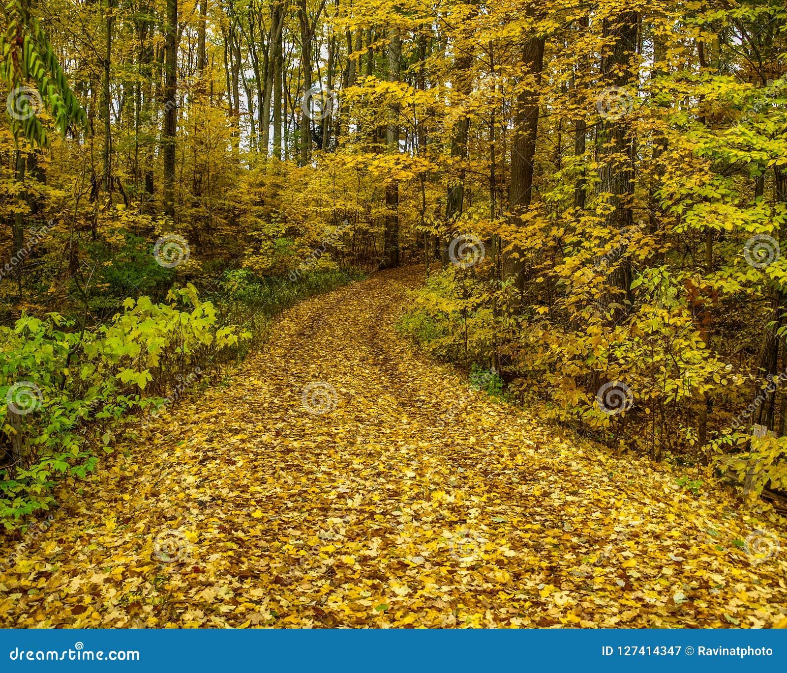 Ścieżka przez lasu w spadku