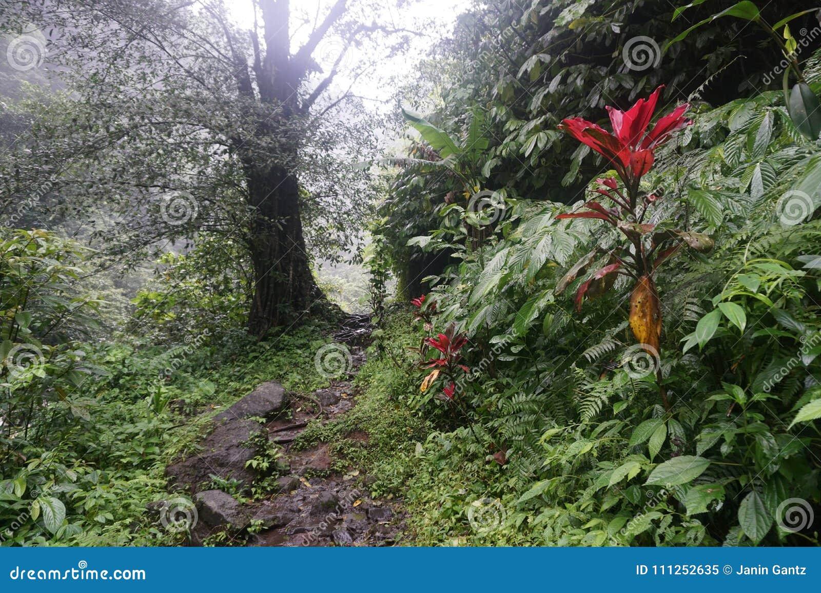 Ścieżka w dżungli podwyżce w Bali Indonezja prawdziwych zielonych roślinach i siklawie
