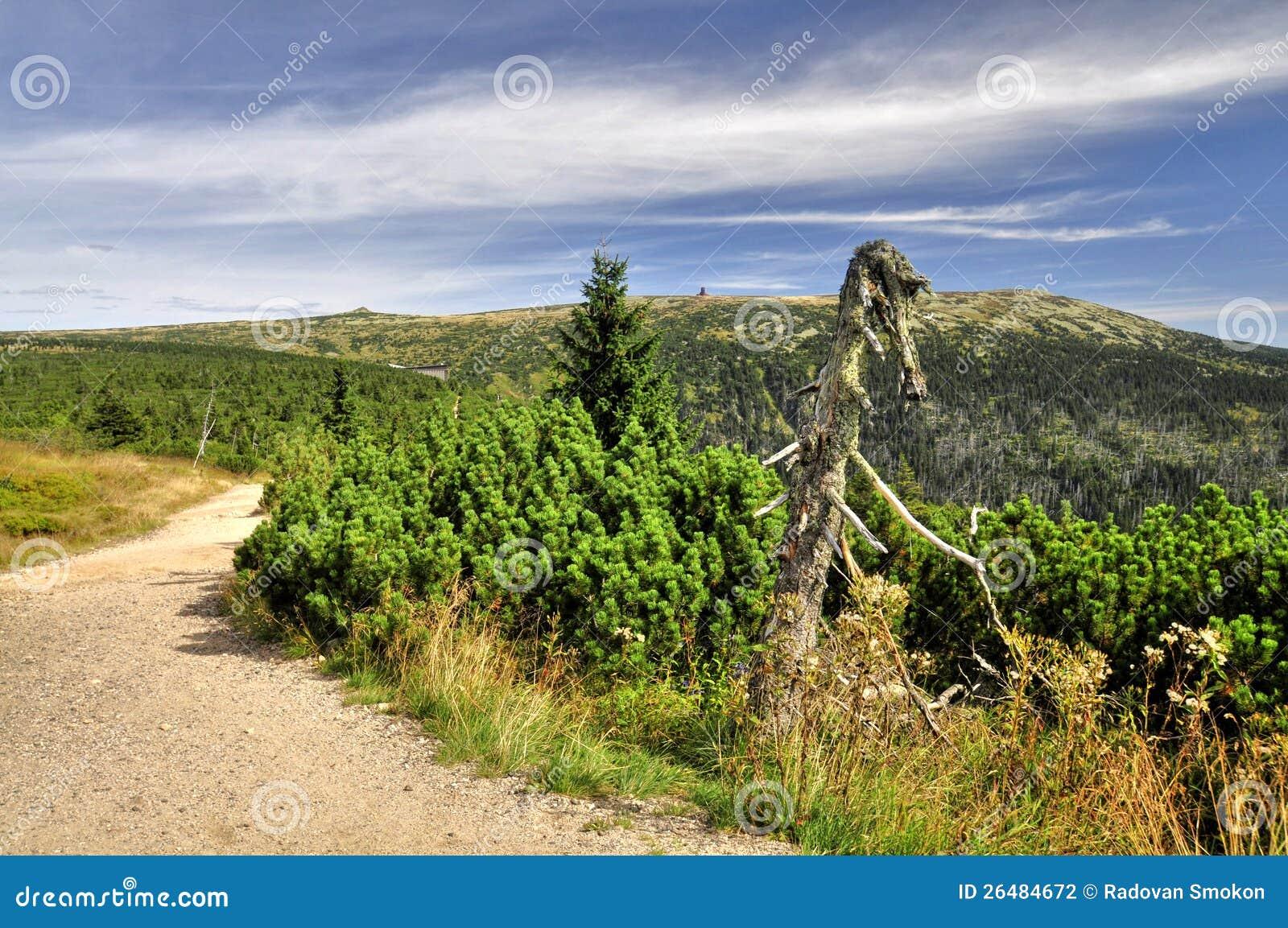 Ścieżka w Krkonose
