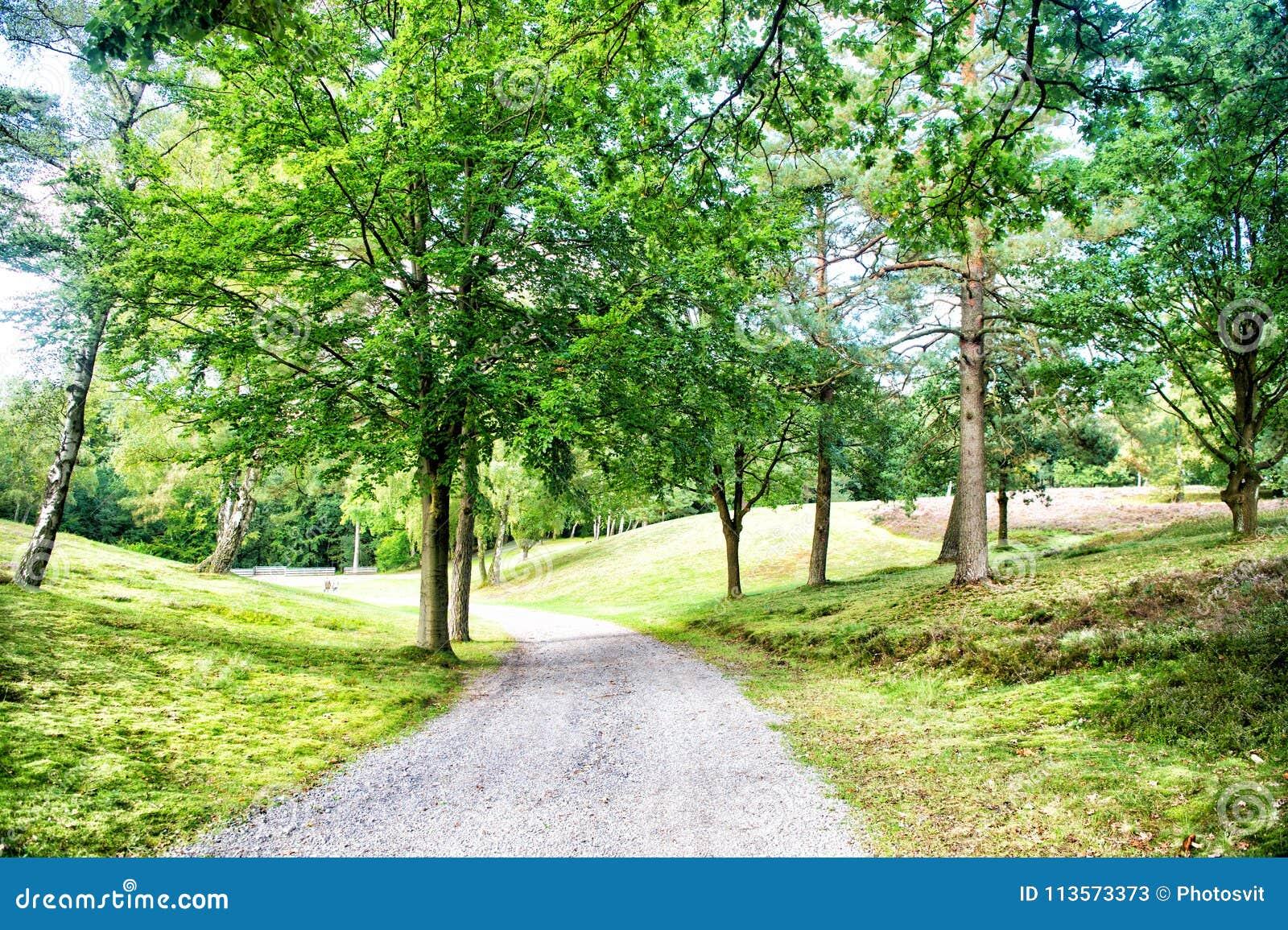 Ścieżka w wiosny lub lata lesie, natura Droga w drewno krajobrazie, środowisko Footpath wśród zielonych drzew, ekologia Natura, e